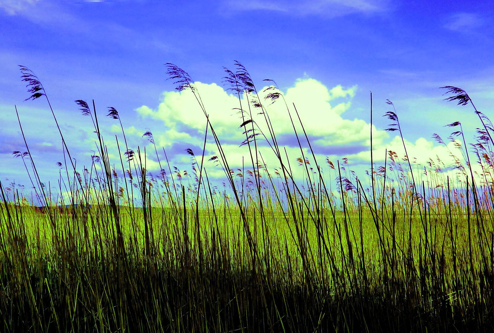 Summertime by cheryl.ferrarkirkham