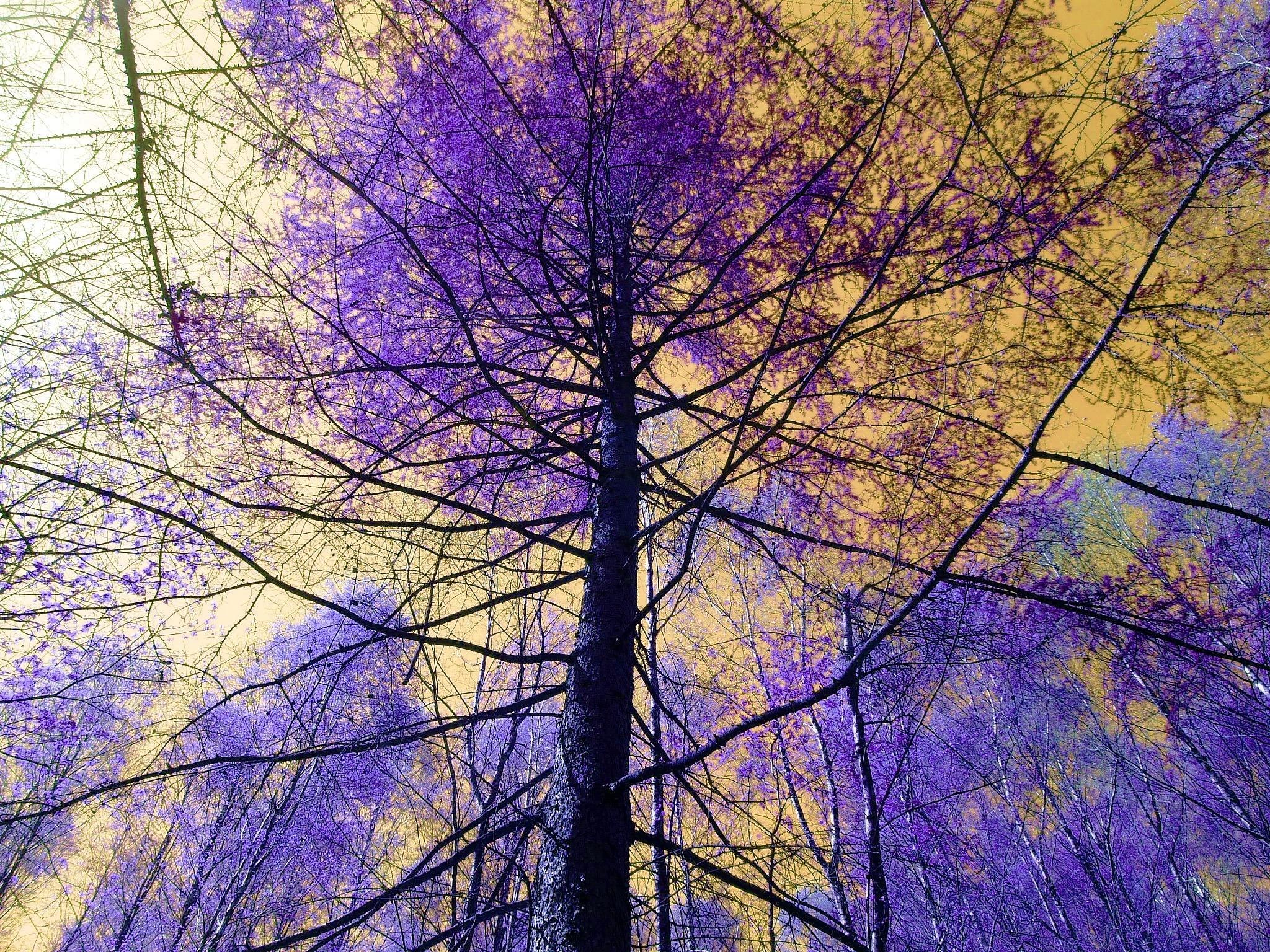 Treetops by cheryl.ferrarkirkham