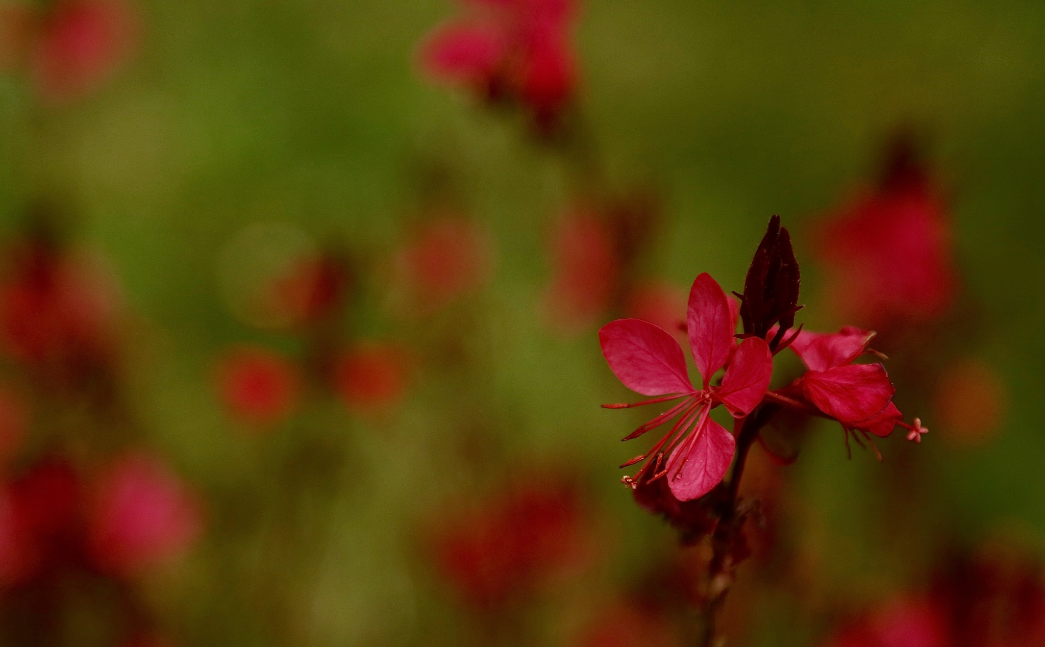 red by meteor14avgust