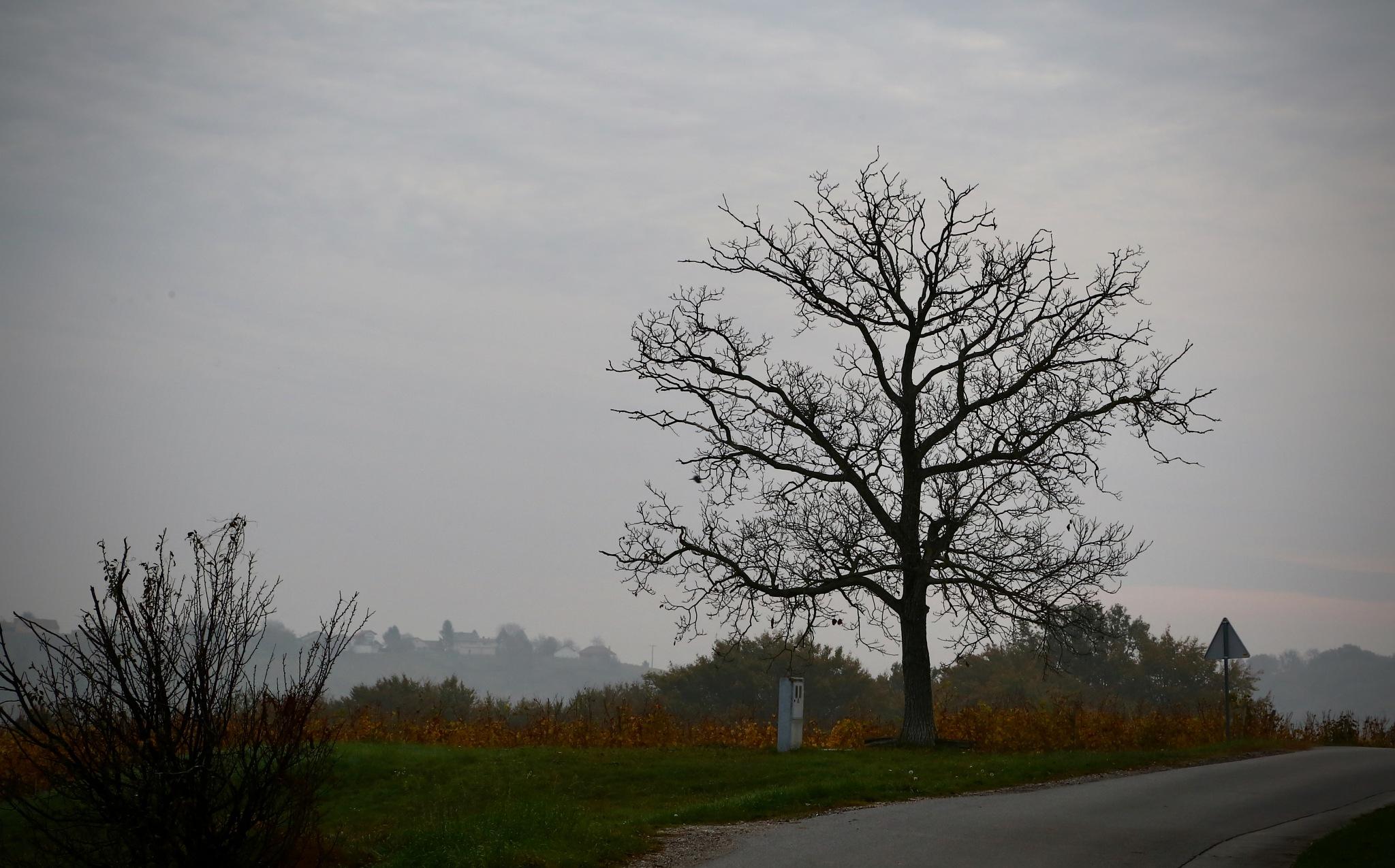 tree by meteor14avgust