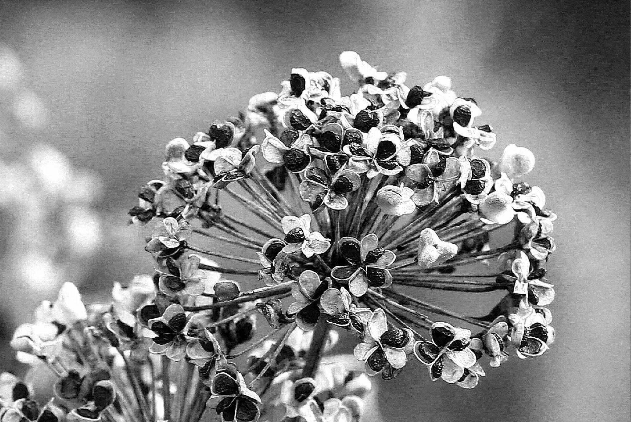 crno/belo by meteor14avgust