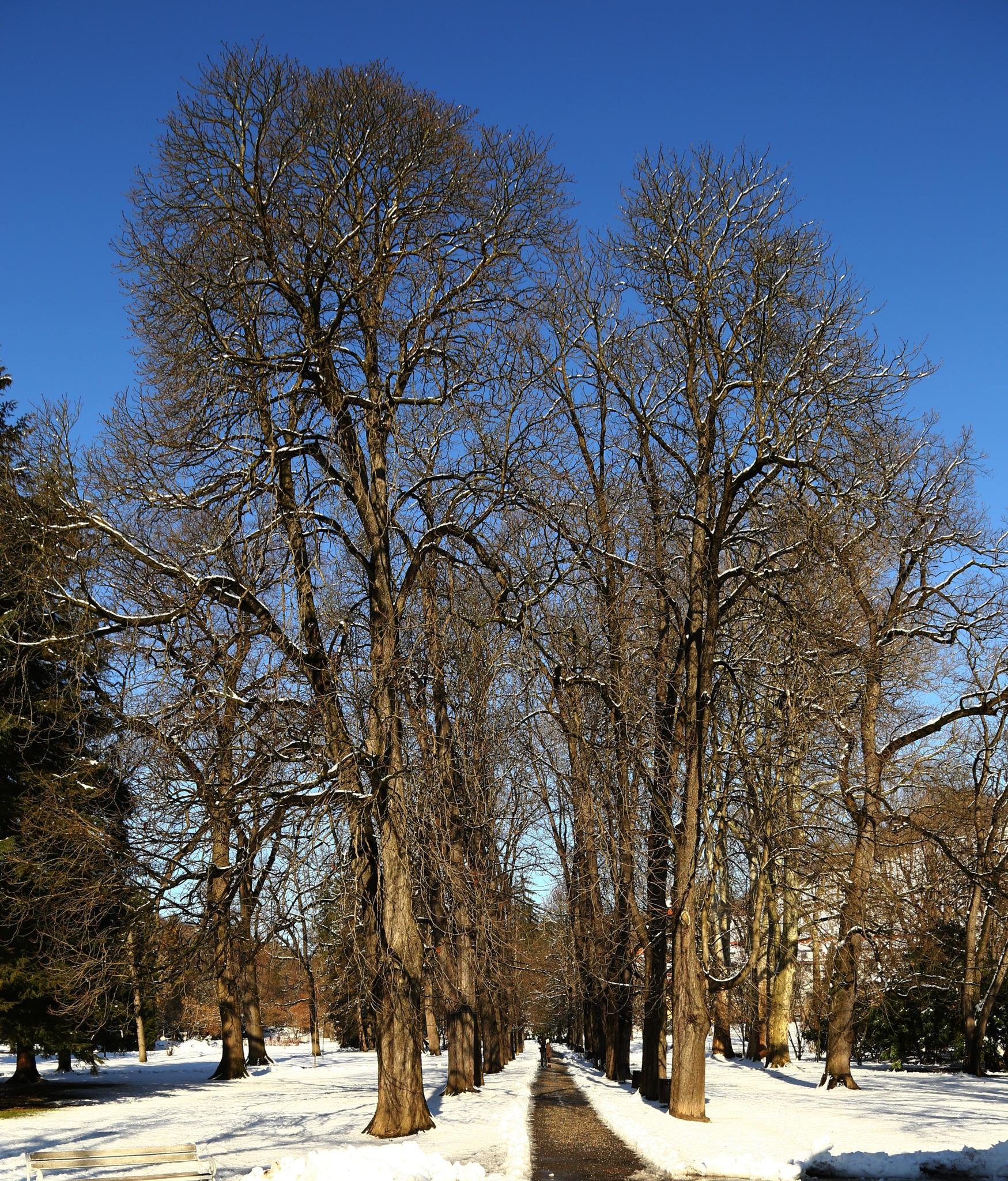 zimska drevored by meteor14avgust