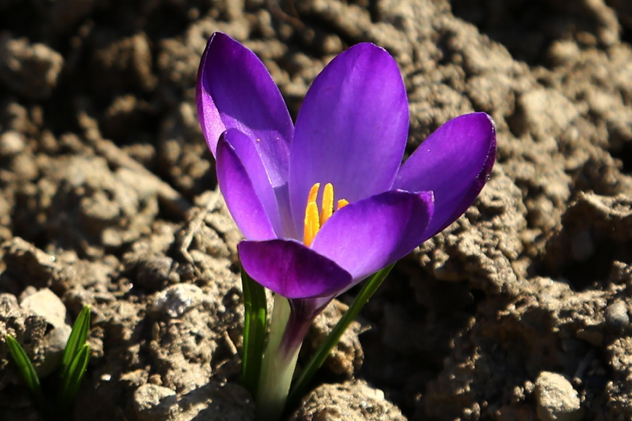 violett  by meteor14avgust