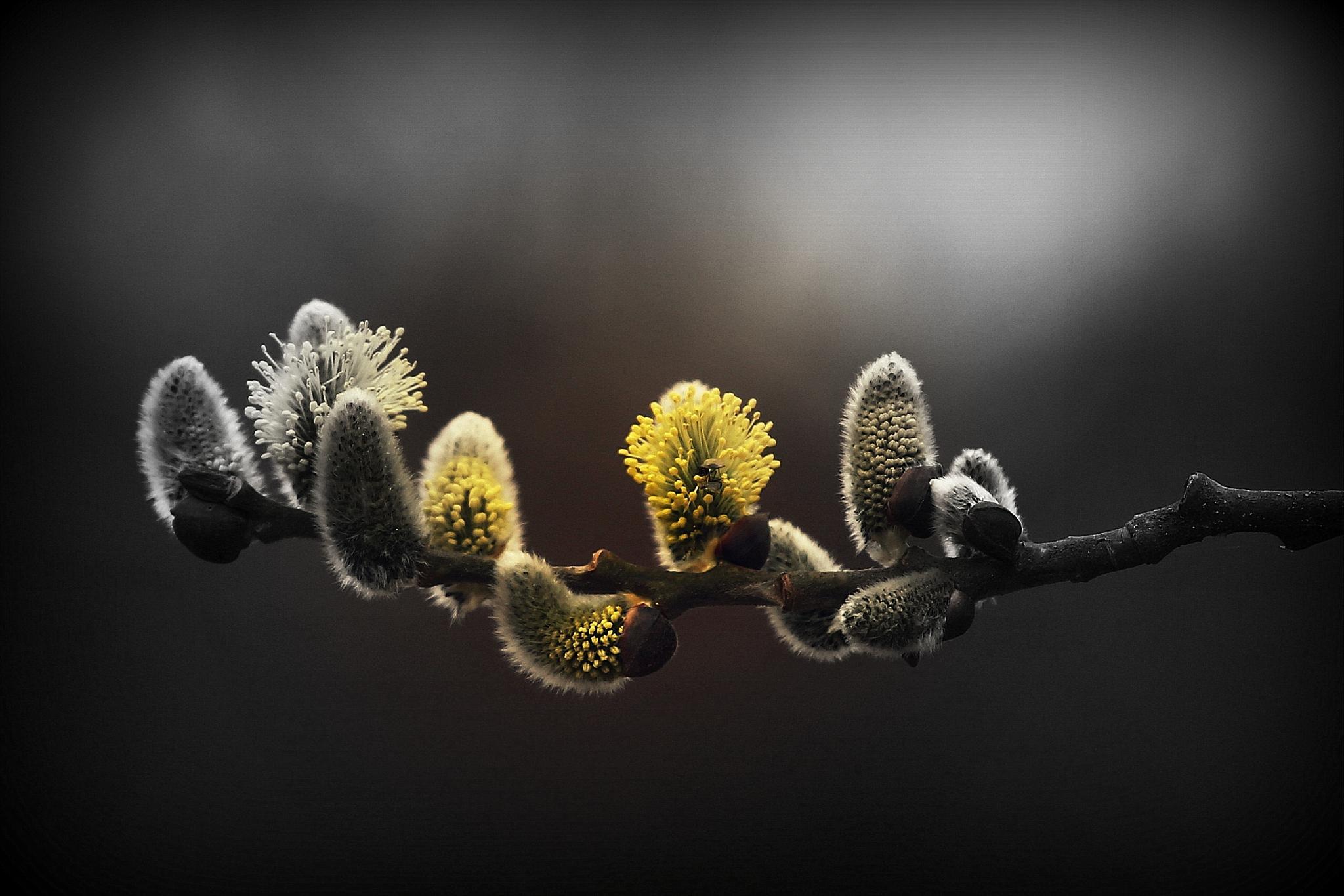 vejica v cvetu  by meteor14avgust