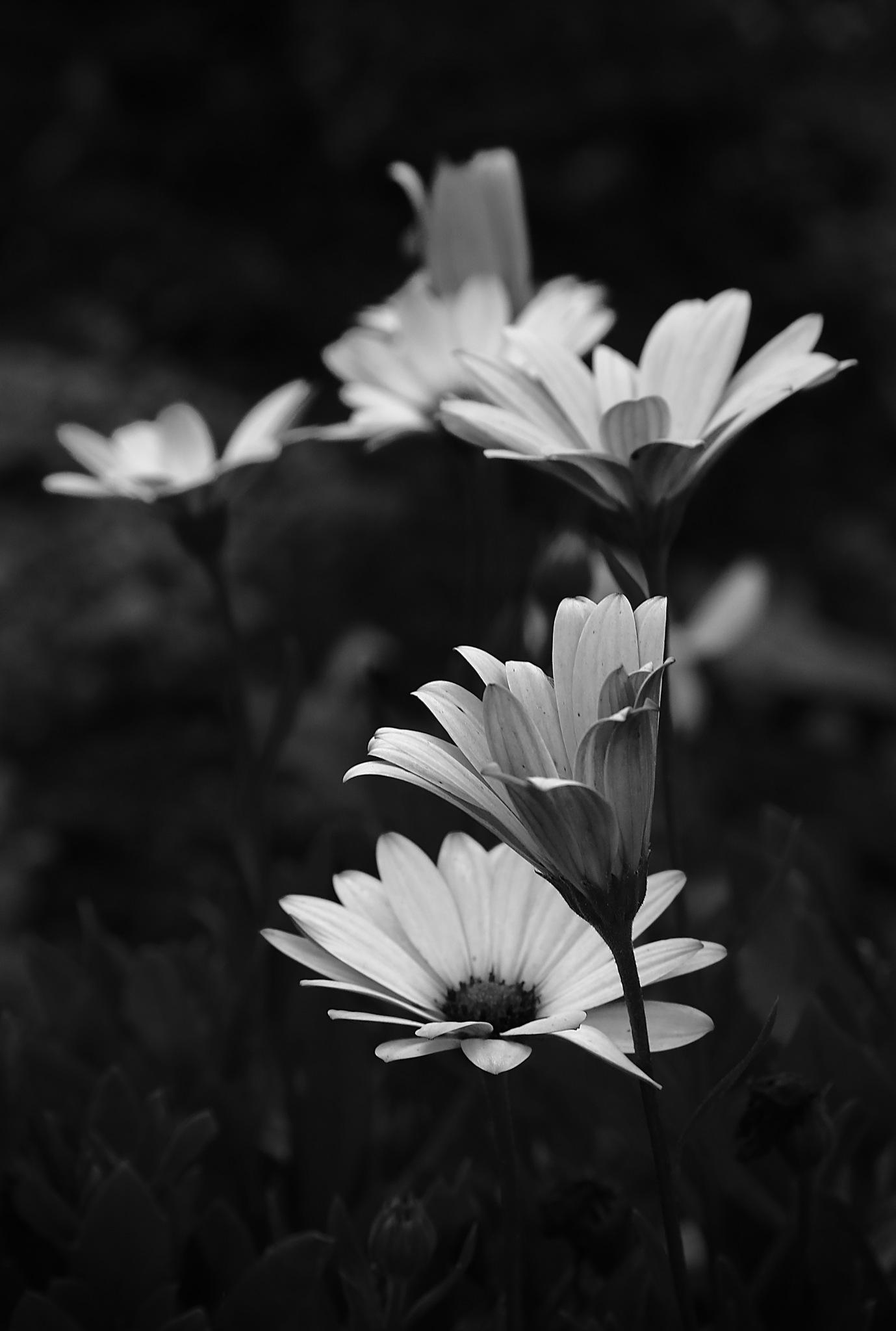 cvetovi by meteor14avgust