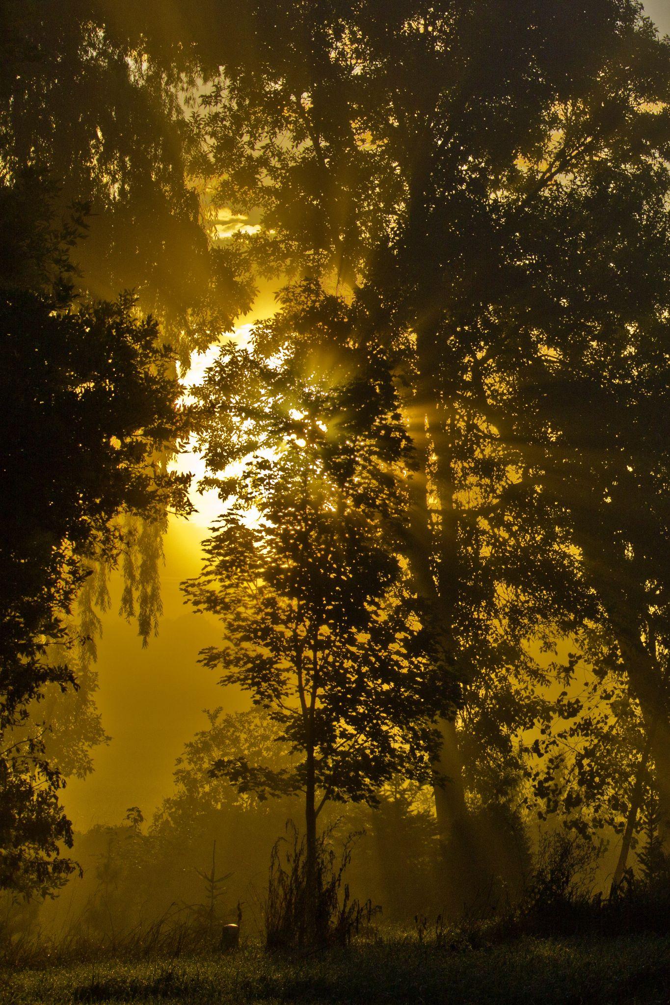 Foggy Sunrise by BadgerBob