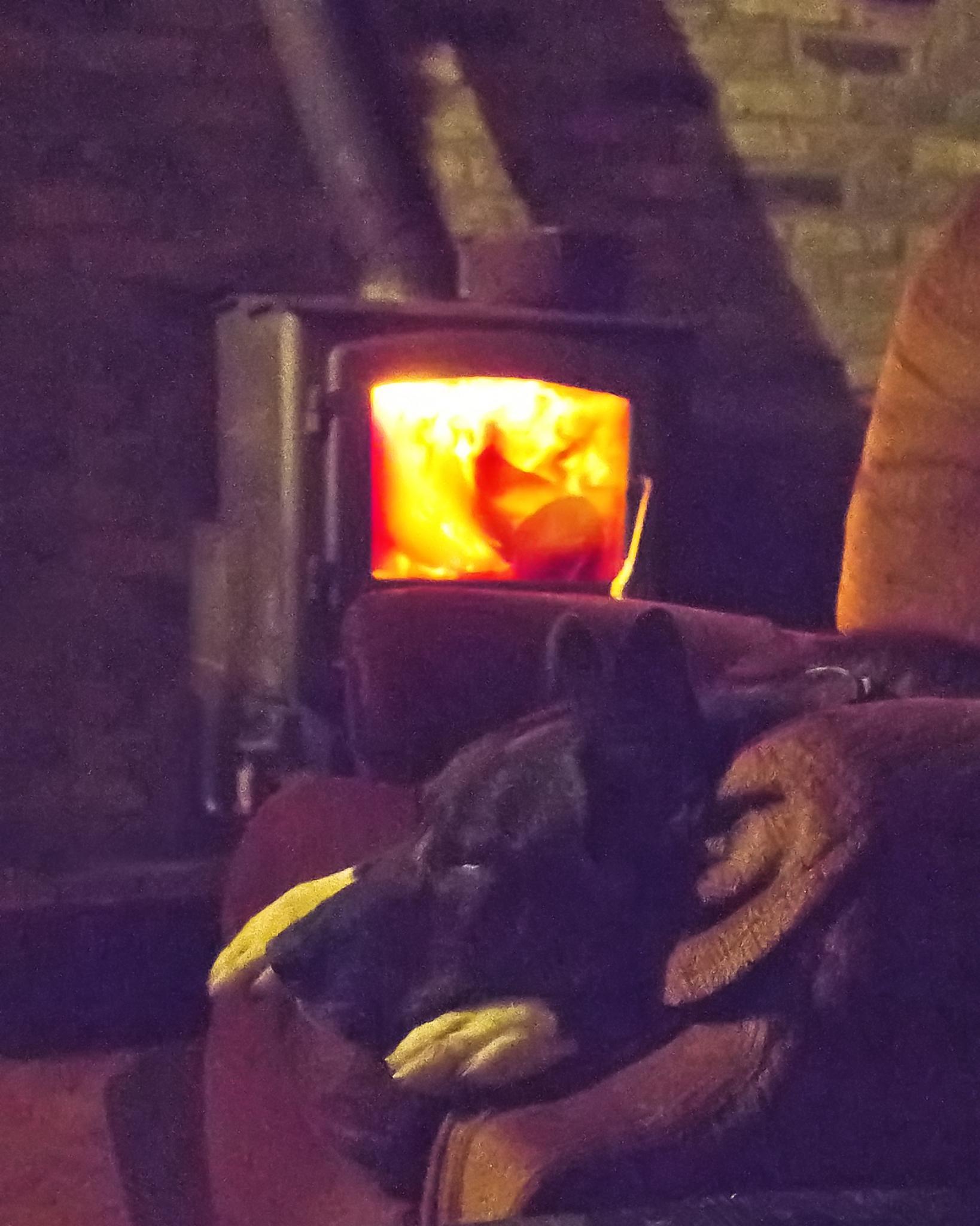 Warm Dog by BadgerBob