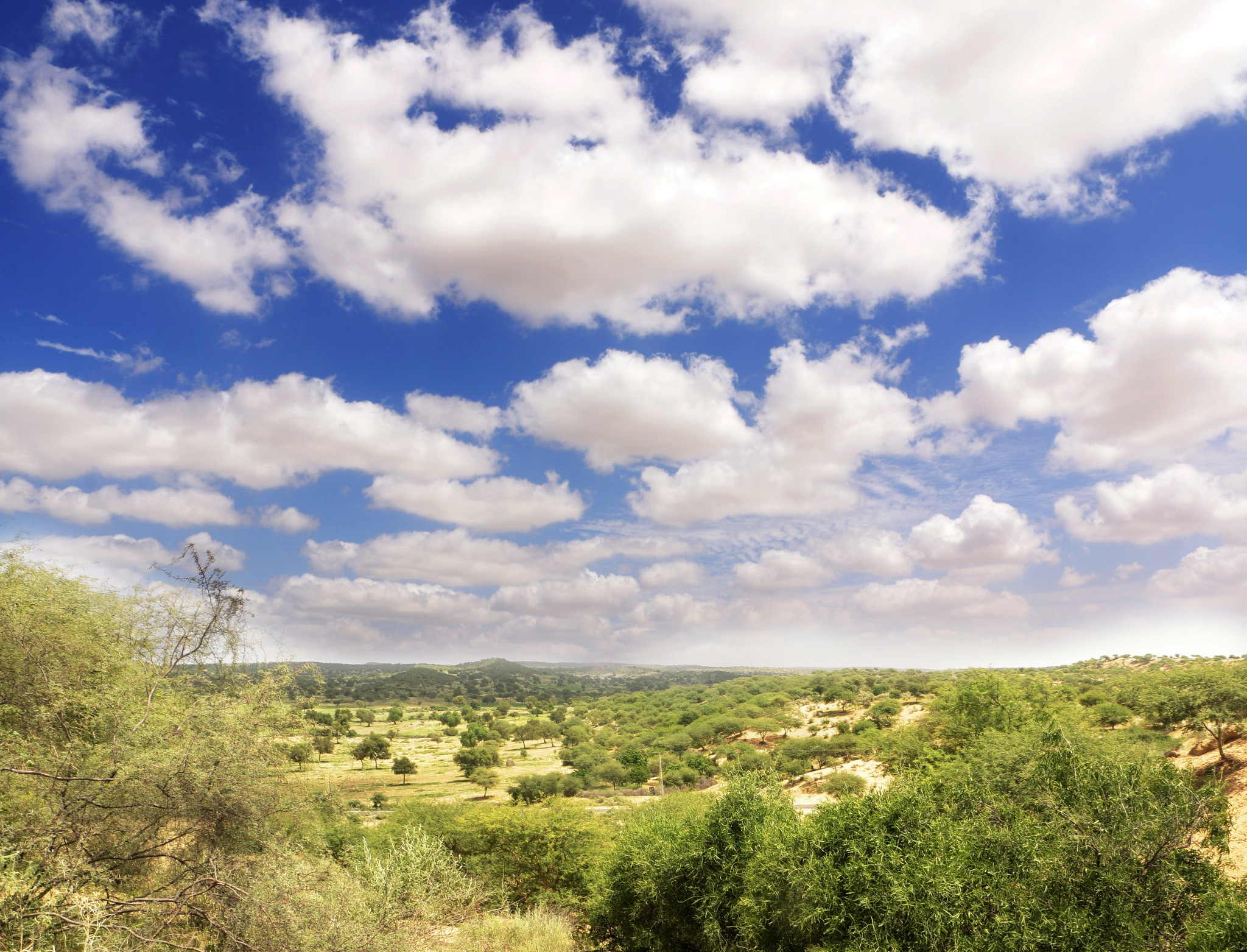 Green Thar Desert Pakistan by Manoj Kumar Genani