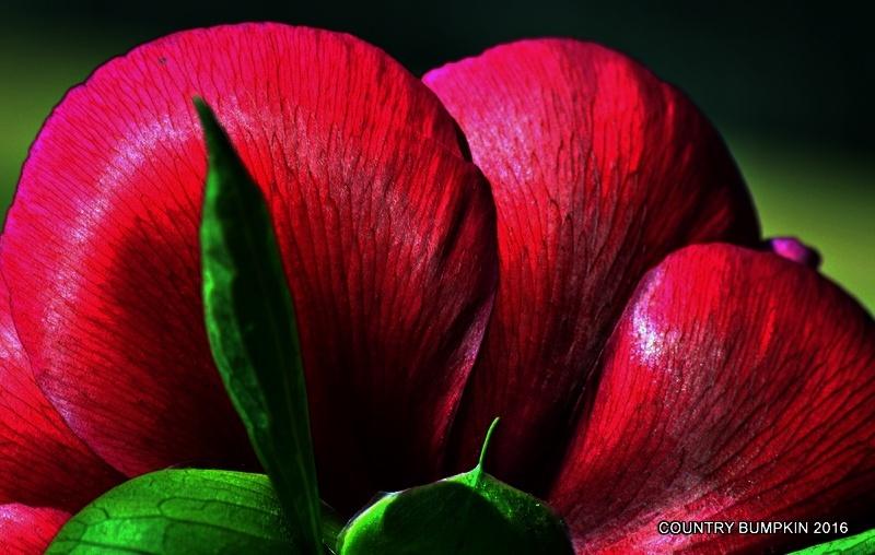 Photo in Nature #plant #plants #colour #colours #garden #gardens