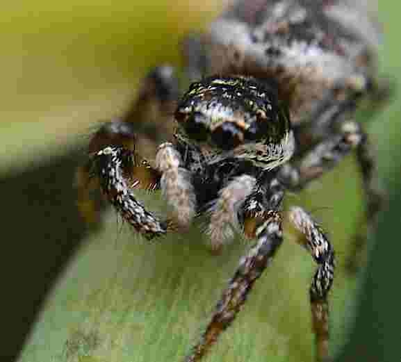 INCHY WINCY SPIDER by PETER WABY