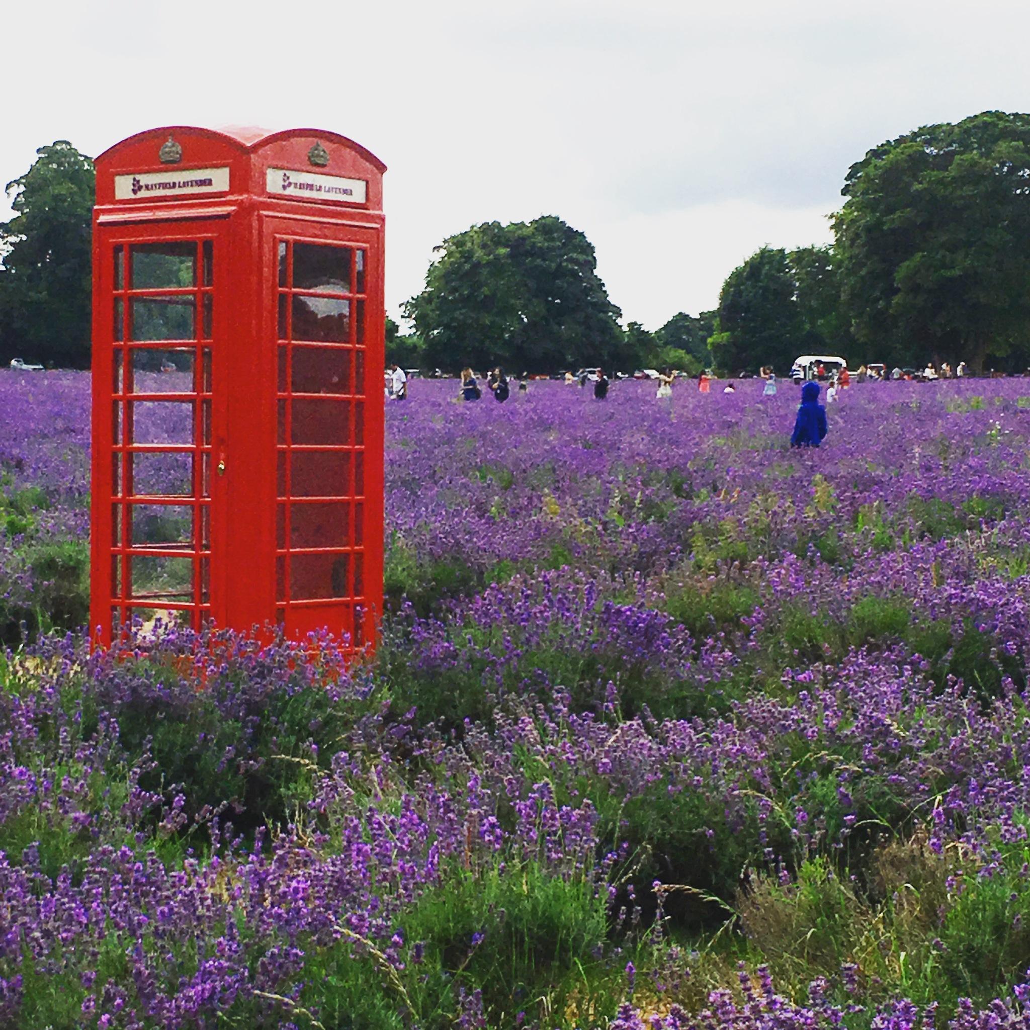 Lavender field by evathjomoe