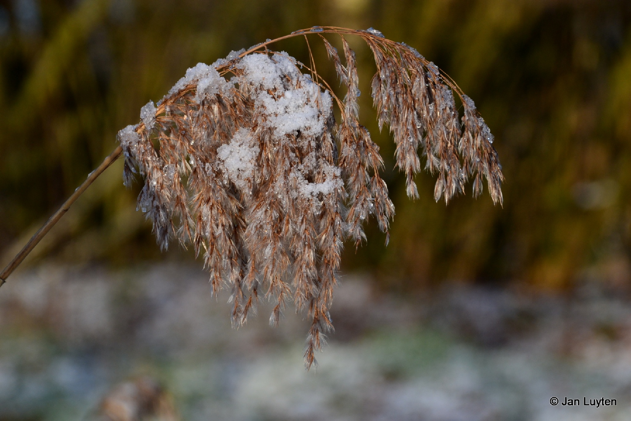 Winterse toestanden by Jan Luyten