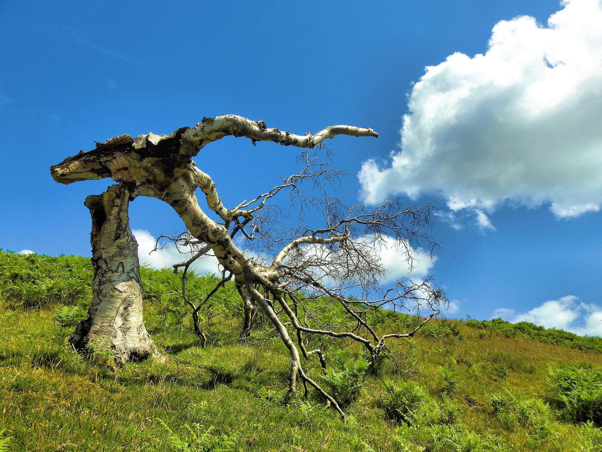 Tree Break! by john.bradburn