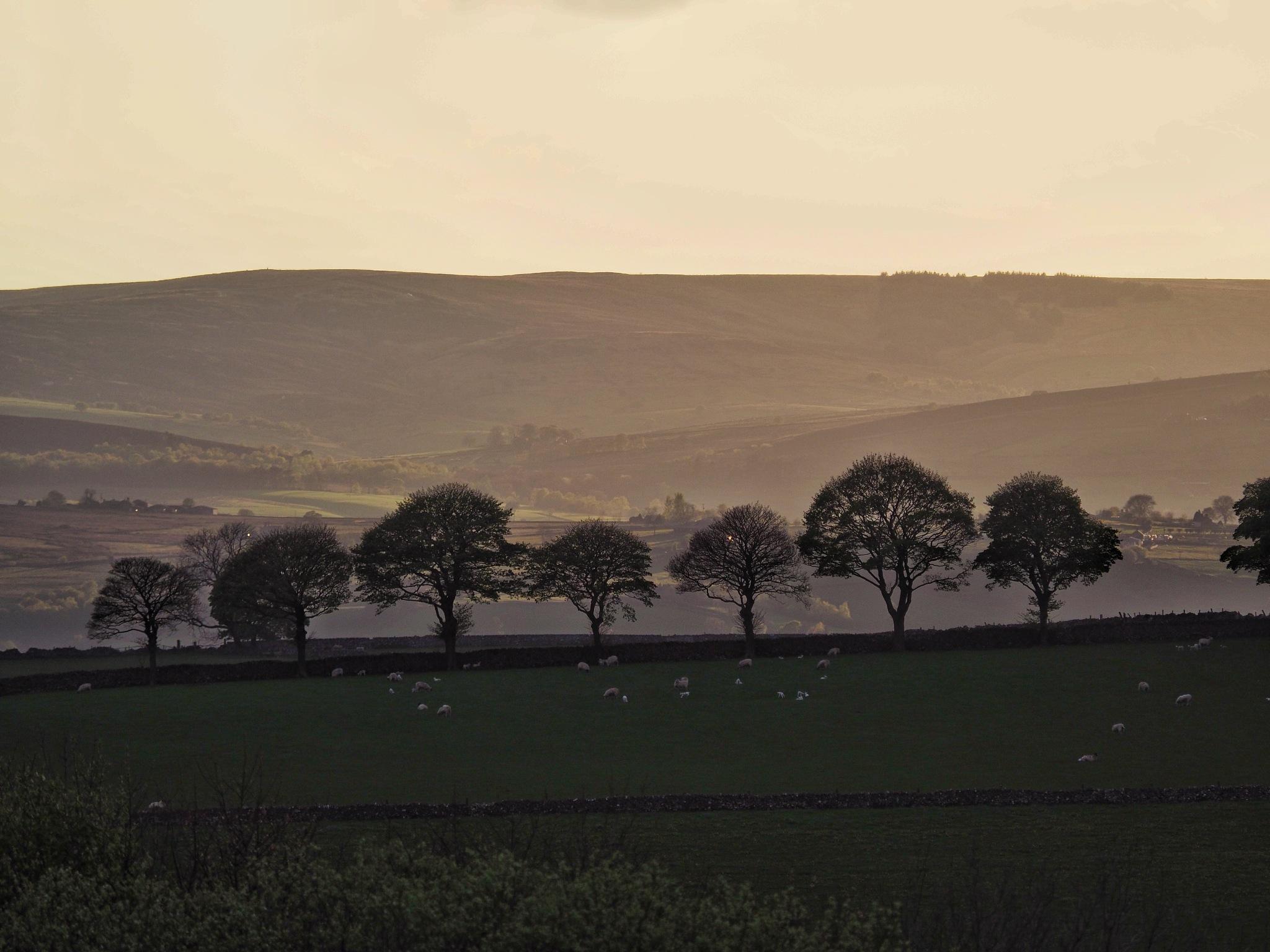 Tree Line, Tissington Trail.Derbyshire. by john.bradburn