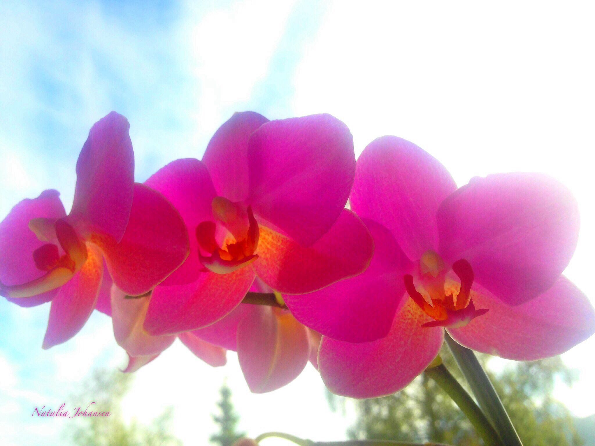 Flowers by natalia.johansen.92