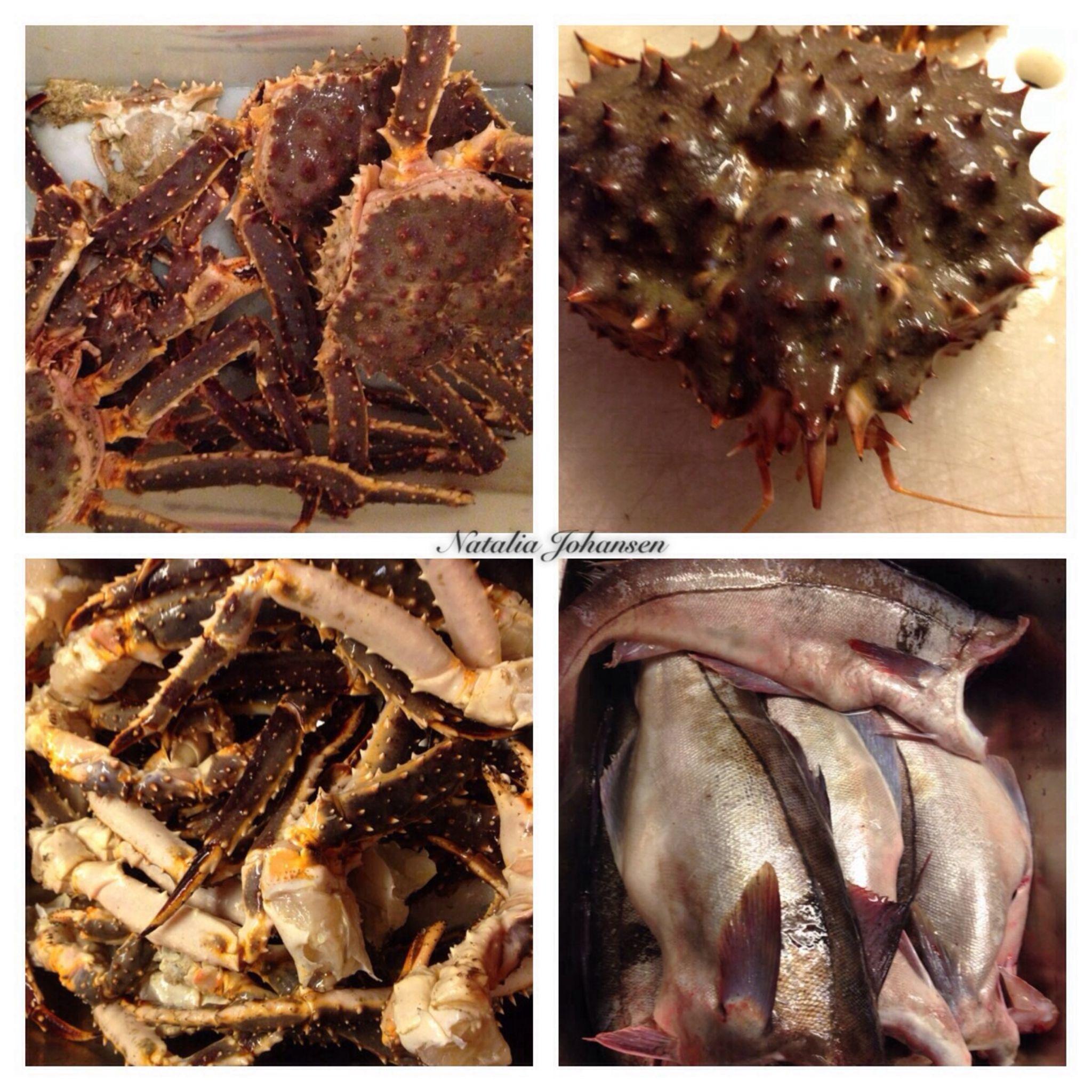 Crab and fish by natalia.johansen.92