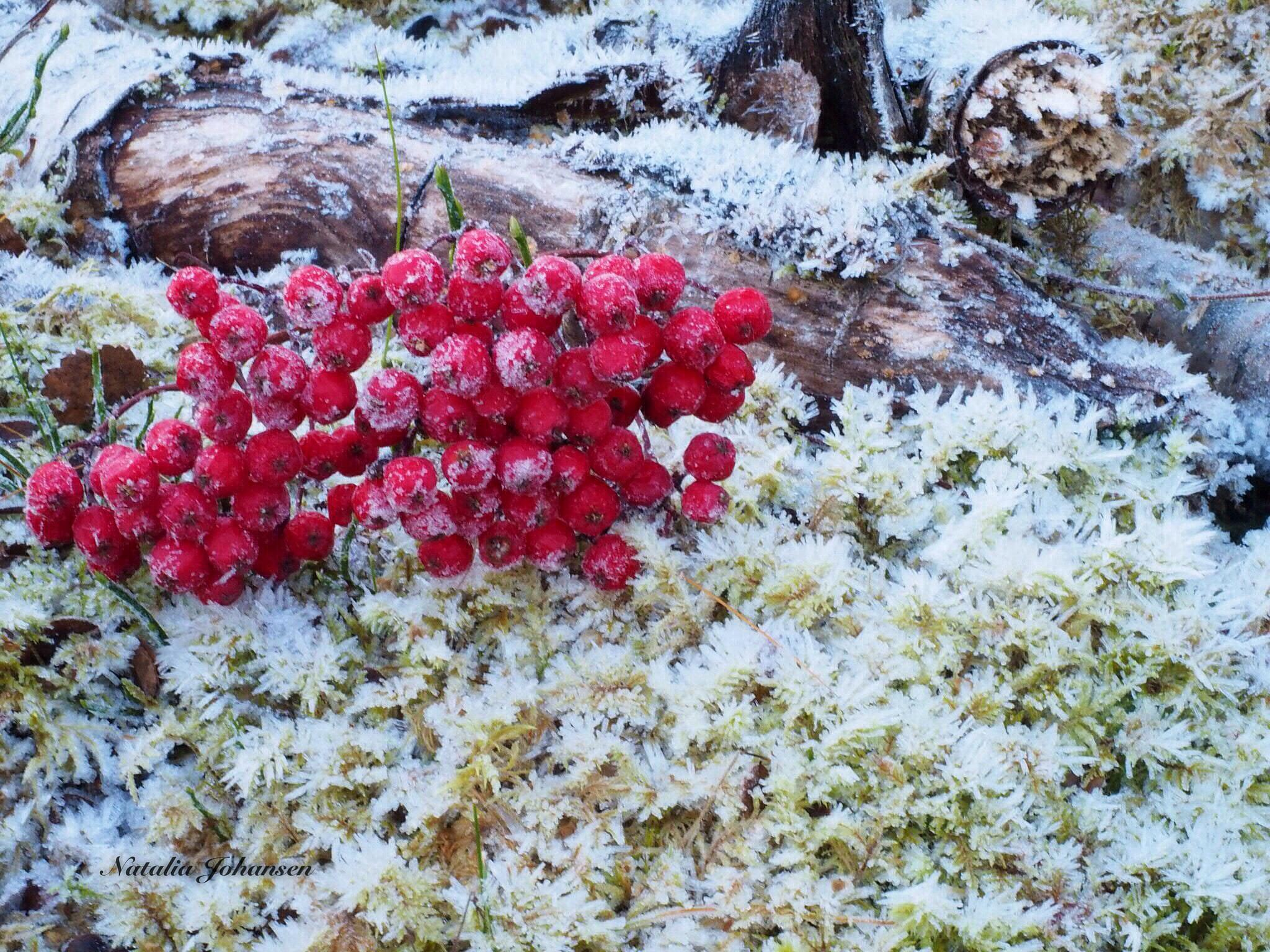 First frost in the forest by natalia.johansen.92