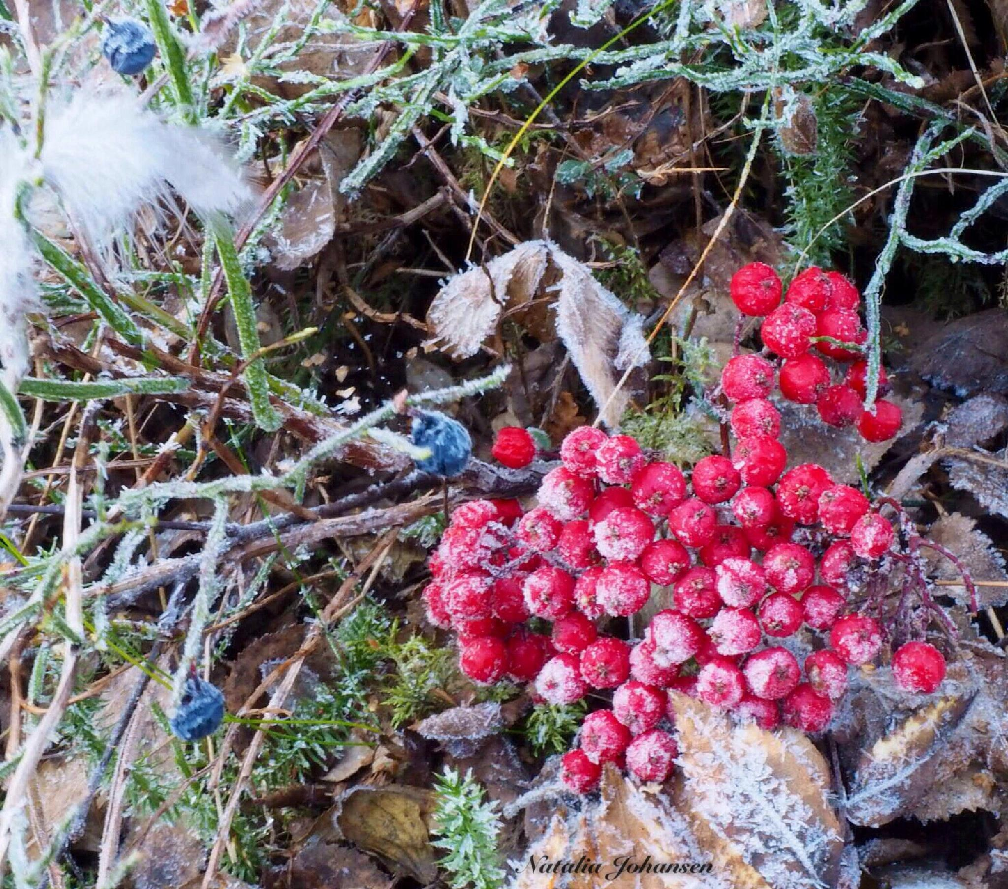 First frost in the forest. by natalia.johansen.92