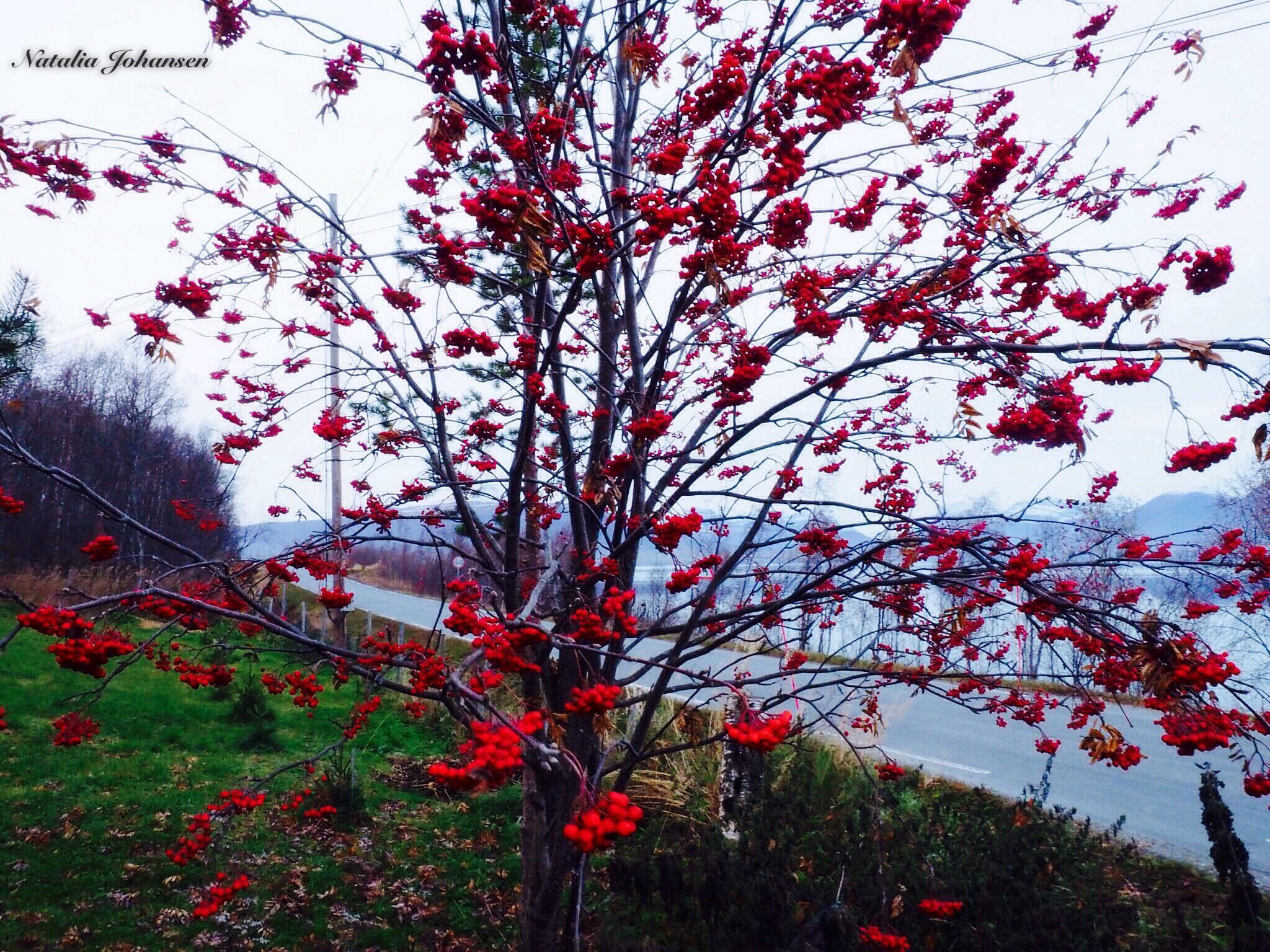 Autumn by natalia.johansen.92