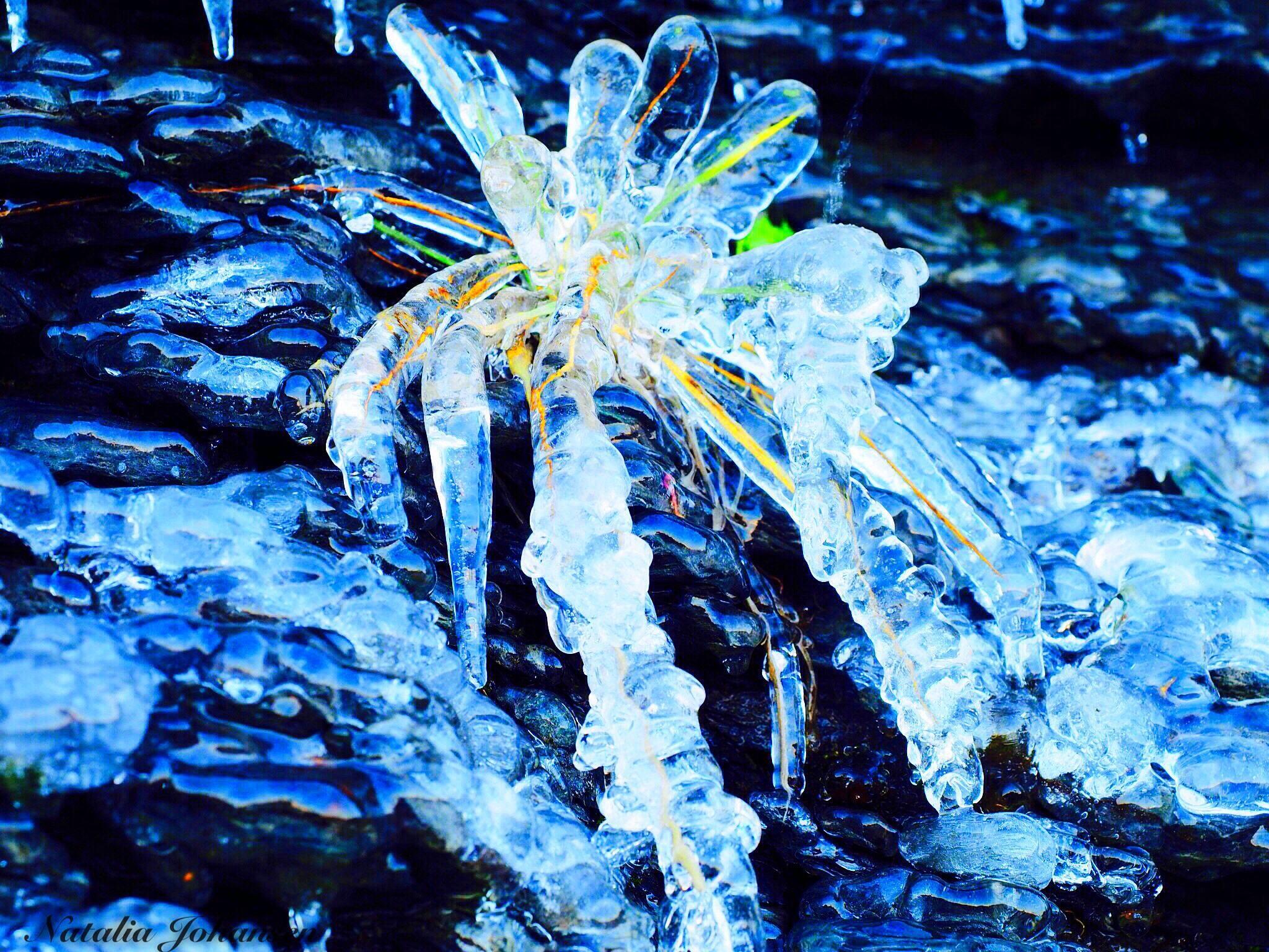 Frost. Nature's art. by natalia.johansen.92