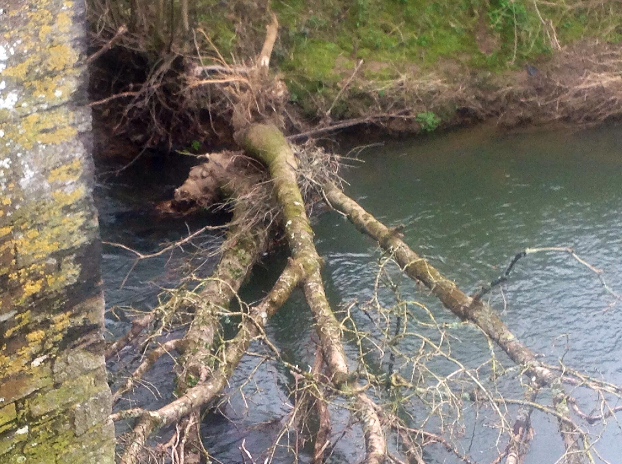 Fallen Tree by ksoar1
