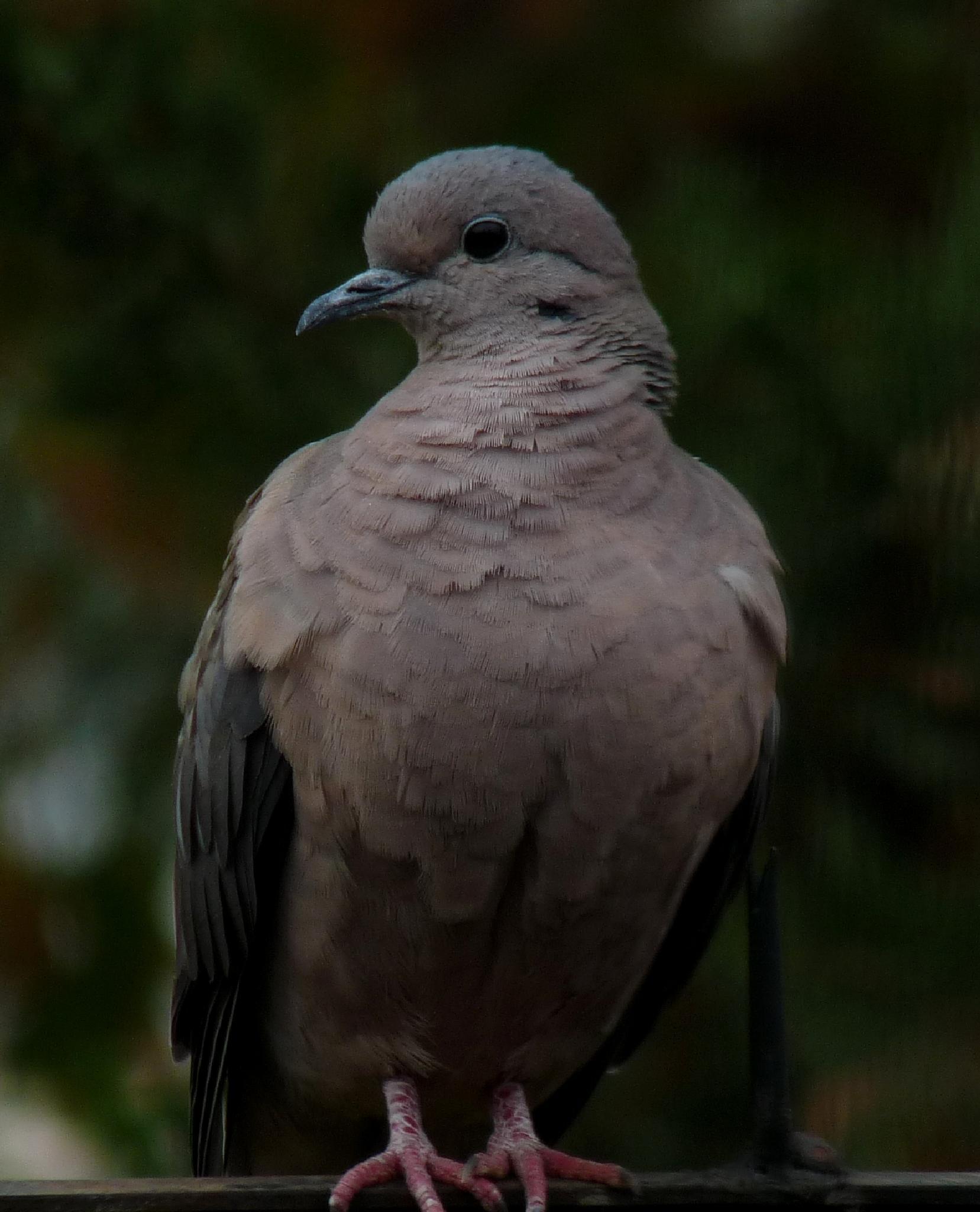 Photo in Animal #palomas #aves