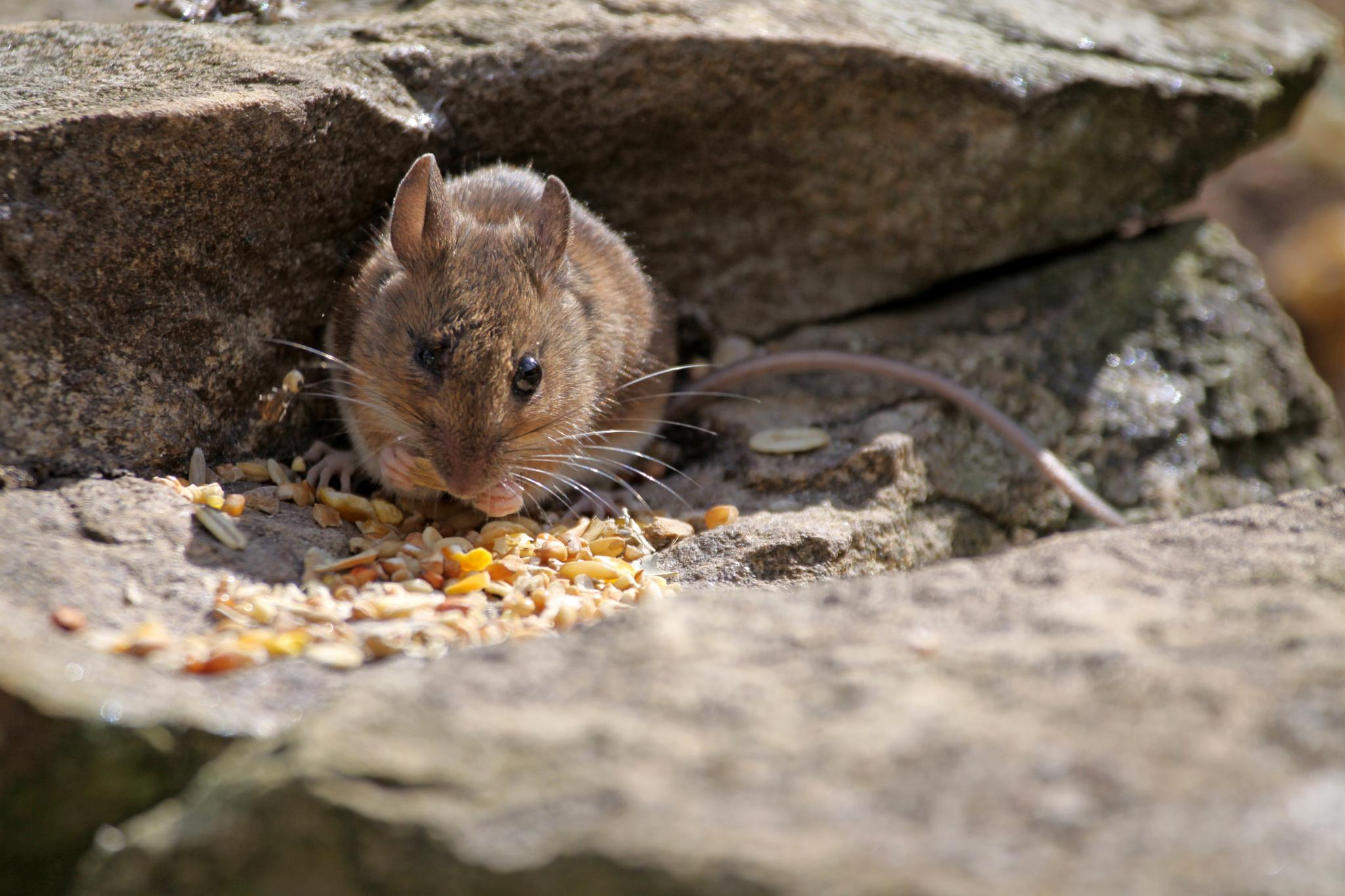 A Tasty Snack by Gerry Beever