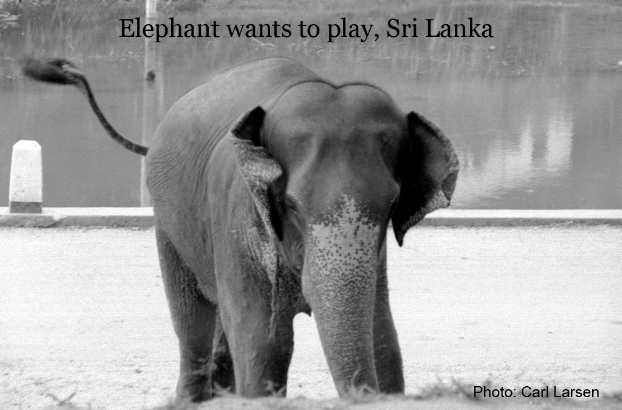Elephant wants to play by lars.erlandsson.9