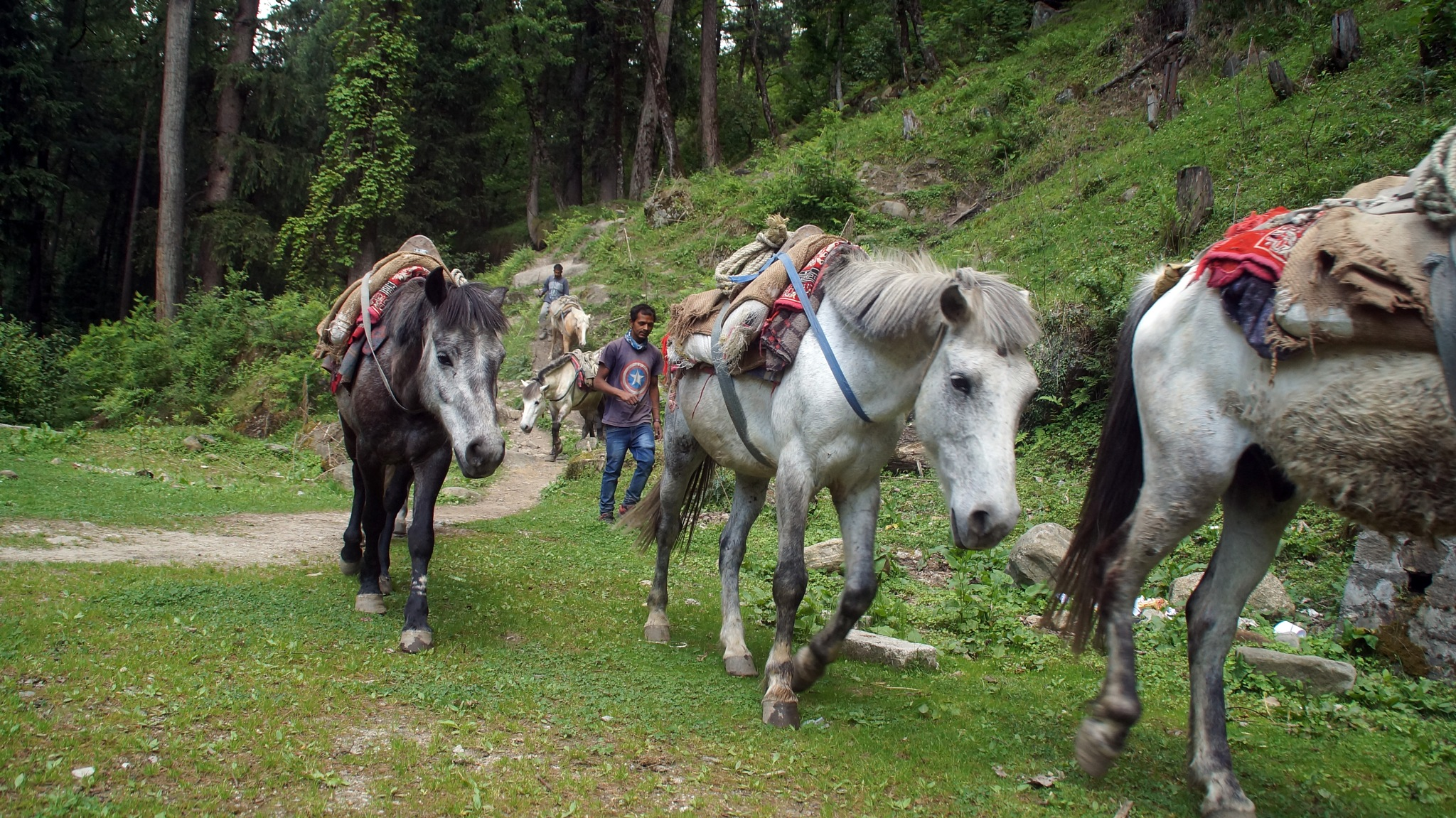 Horses coming down from the mountains in Parvati Valley, India 2018 by lars.erlandsson.9