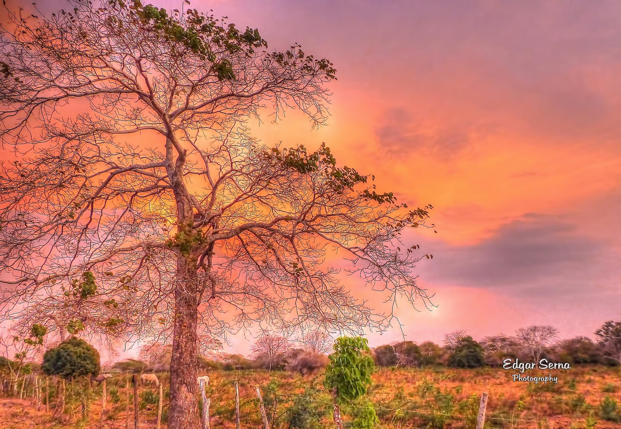 Sunset by Edgar Serna