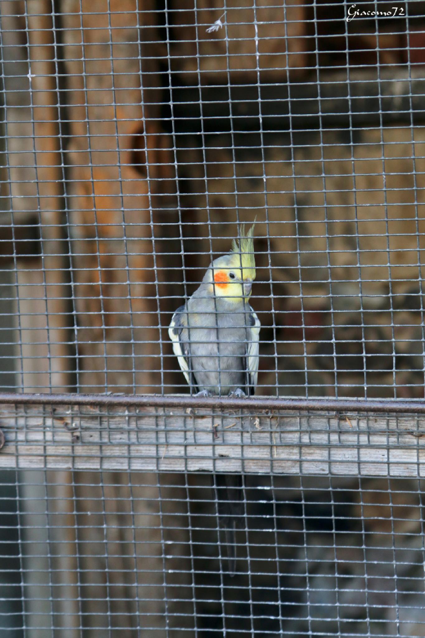 Il re in prigione by Giacomo72