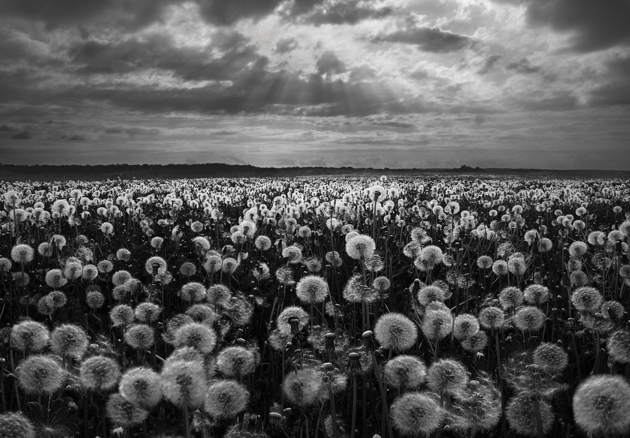 Dandelion's Day by lilia.rasnovskaya