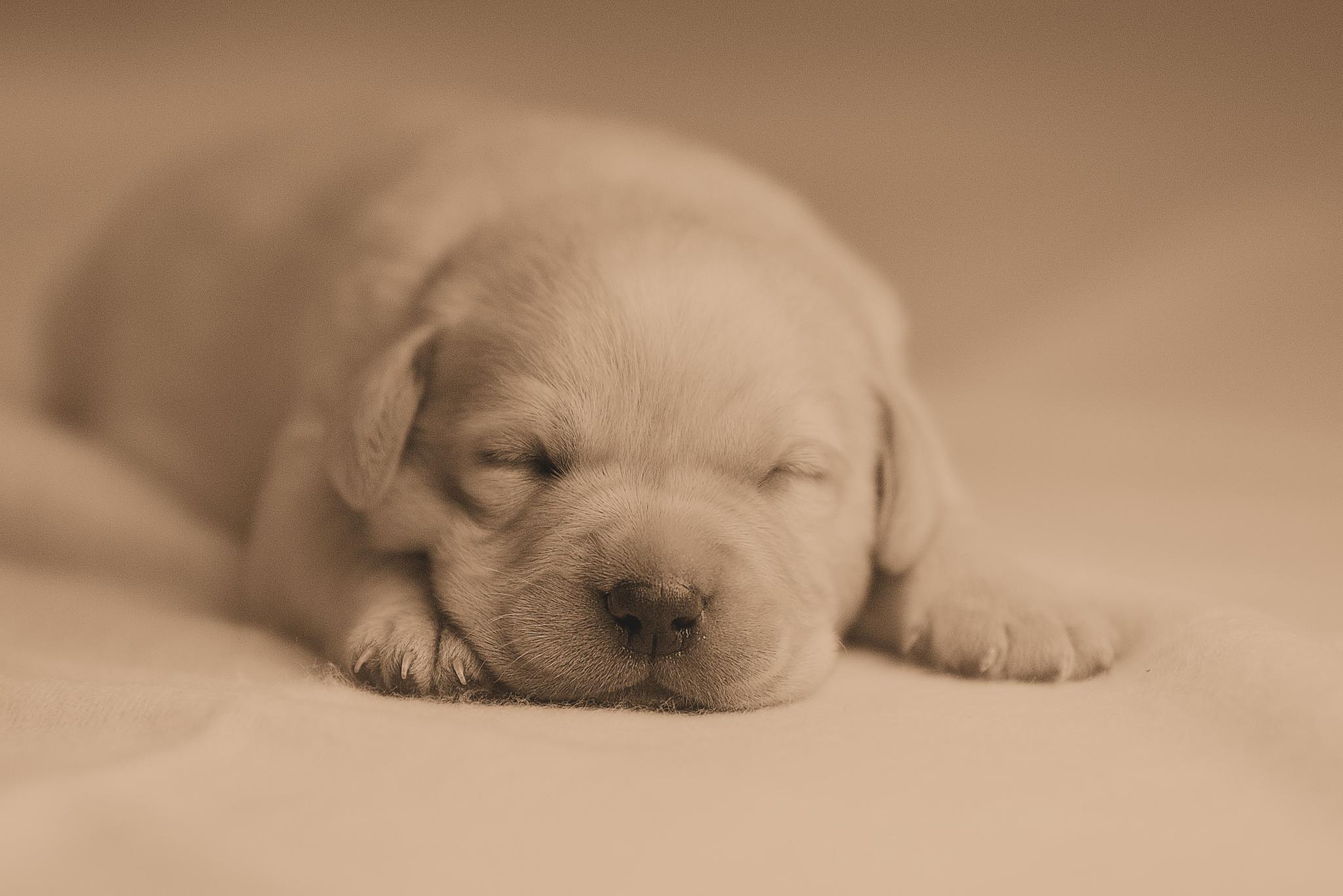 Puppy by danni.schmidt2101