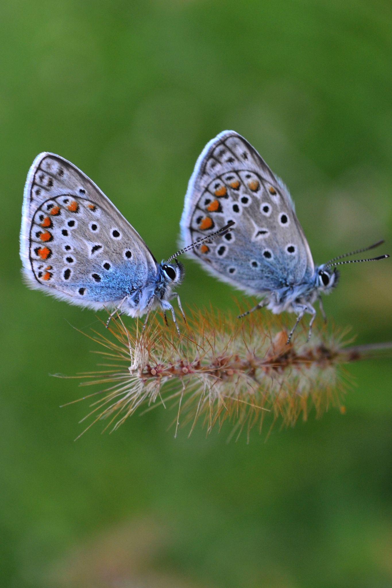 Butterfly by Nusaa