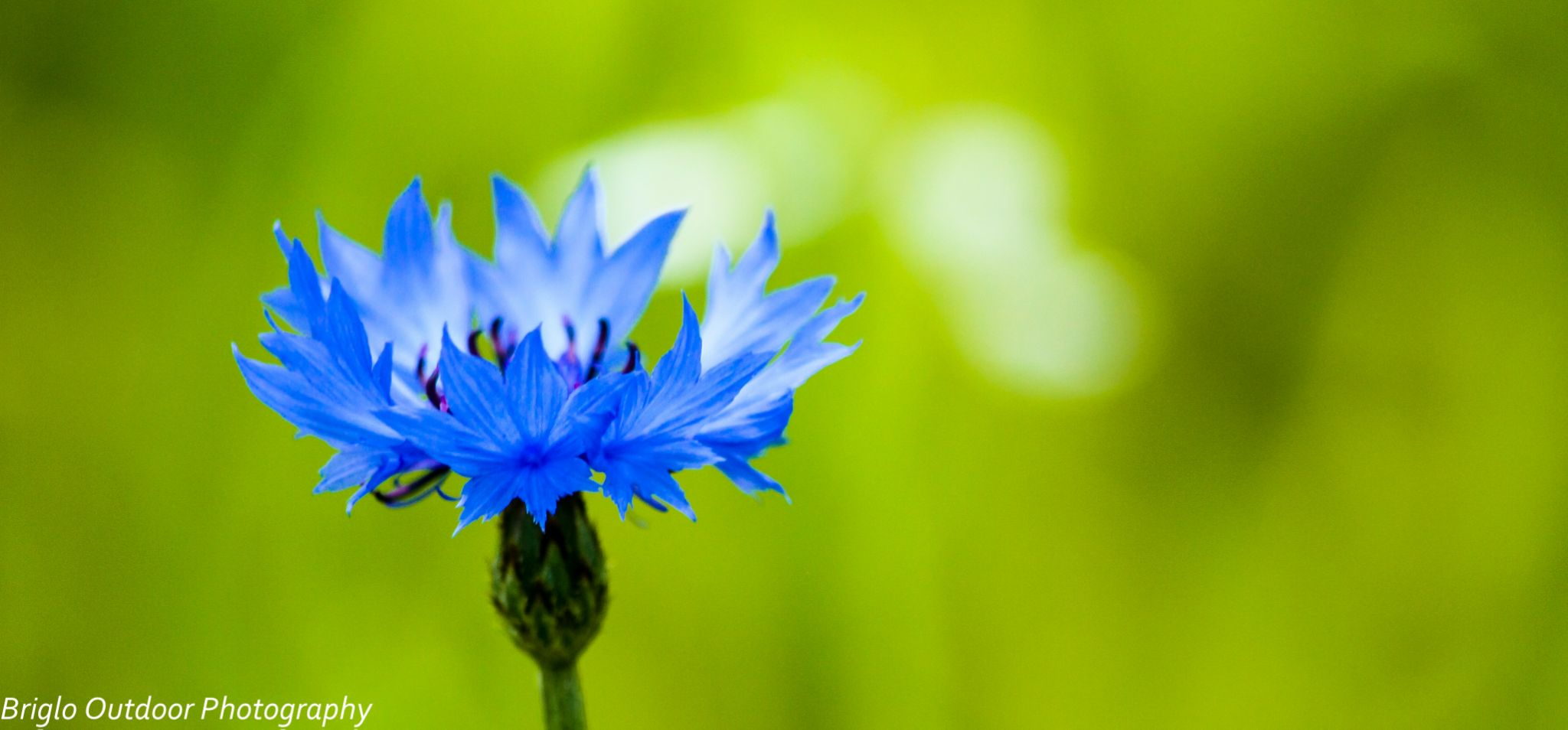 BLue by Briglo Outdoor Photography