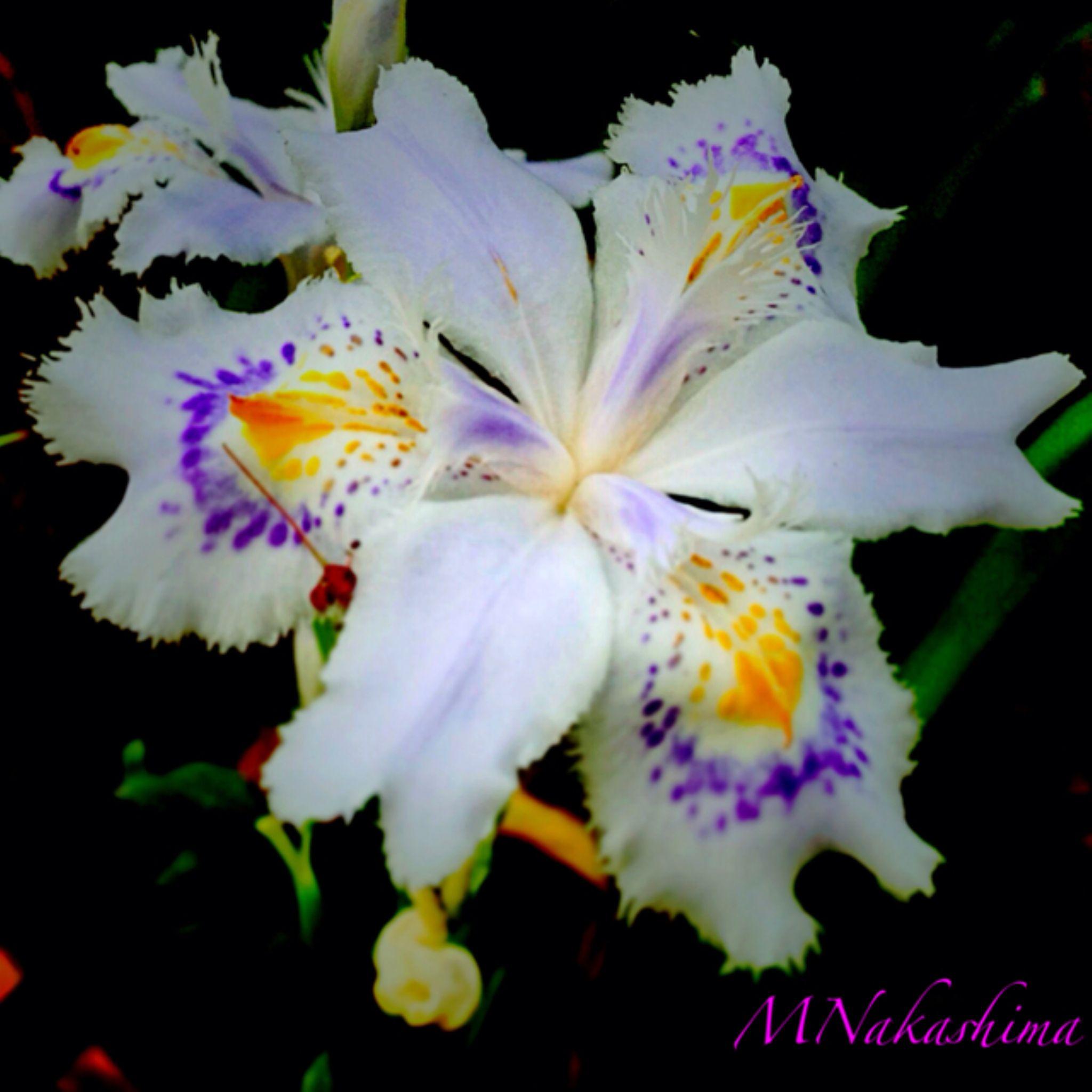 IMG_4382 by marina.nakashima
