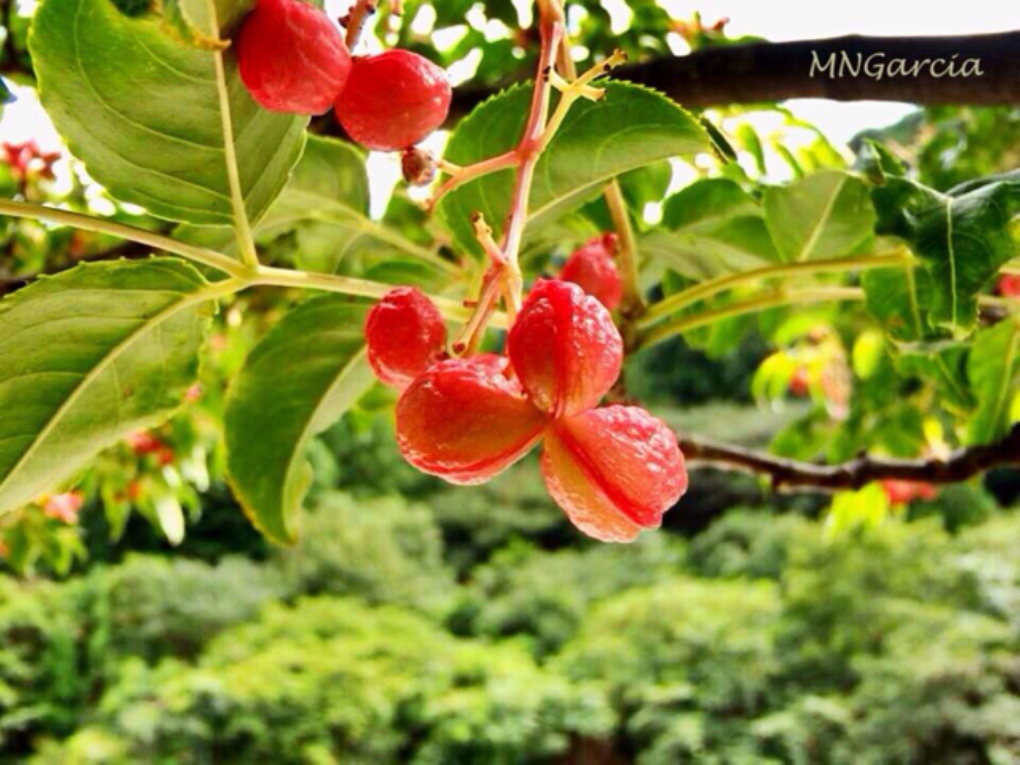 IMG_5809 by marina.nakashima
