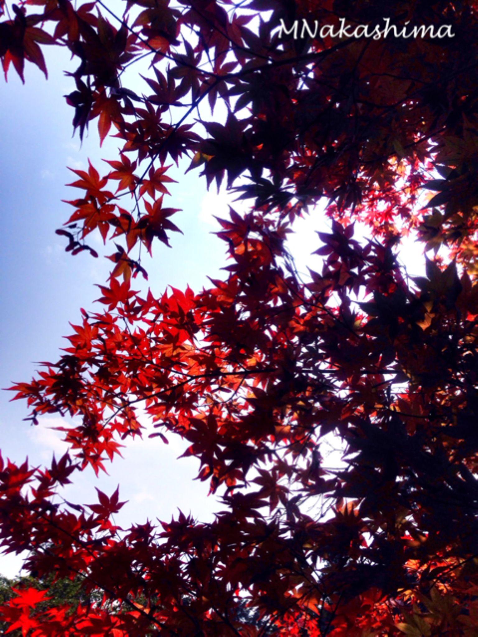 IMG_4568 by marina.nakashima