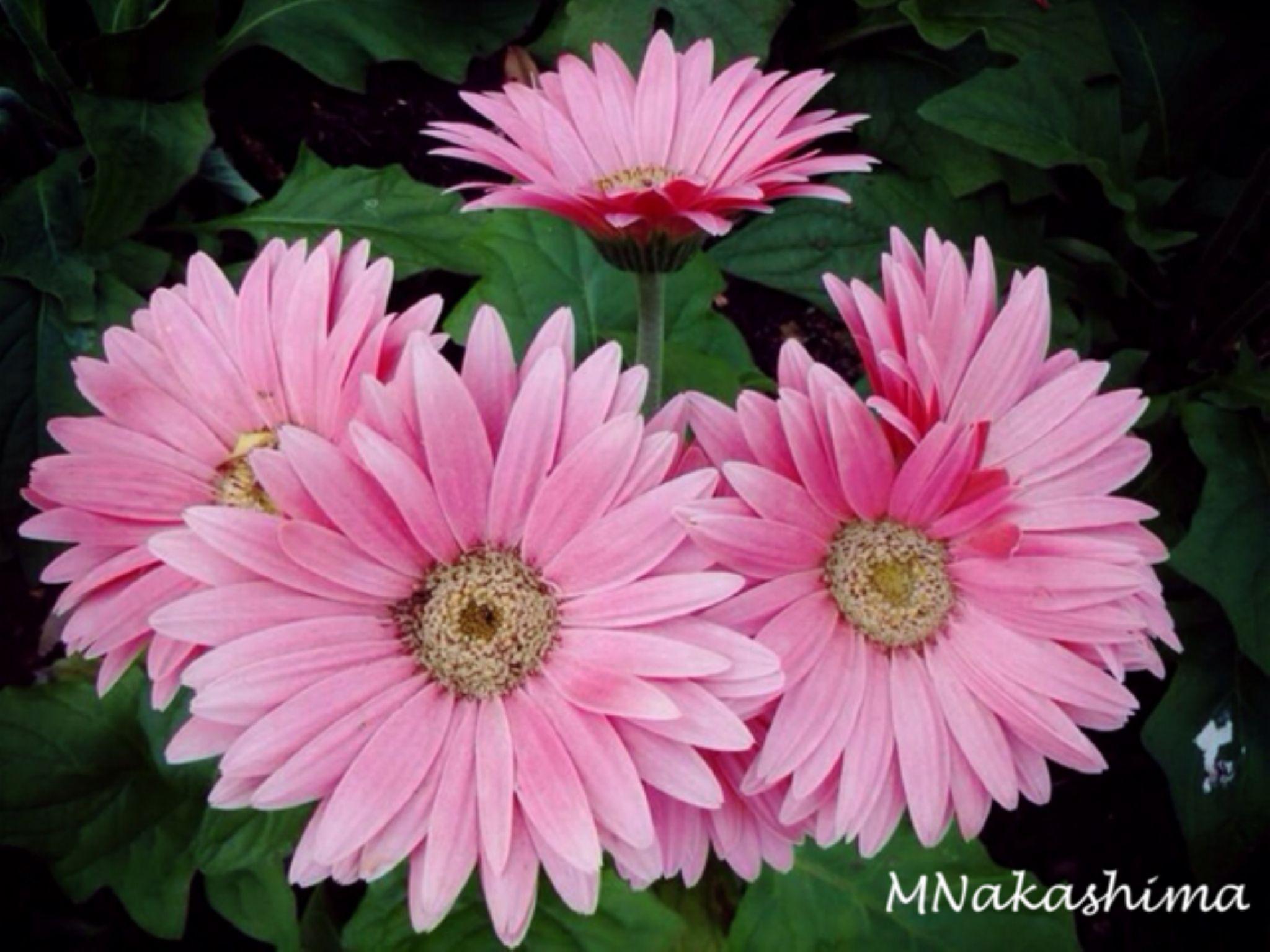 IMG_5087 by marina.nakashima