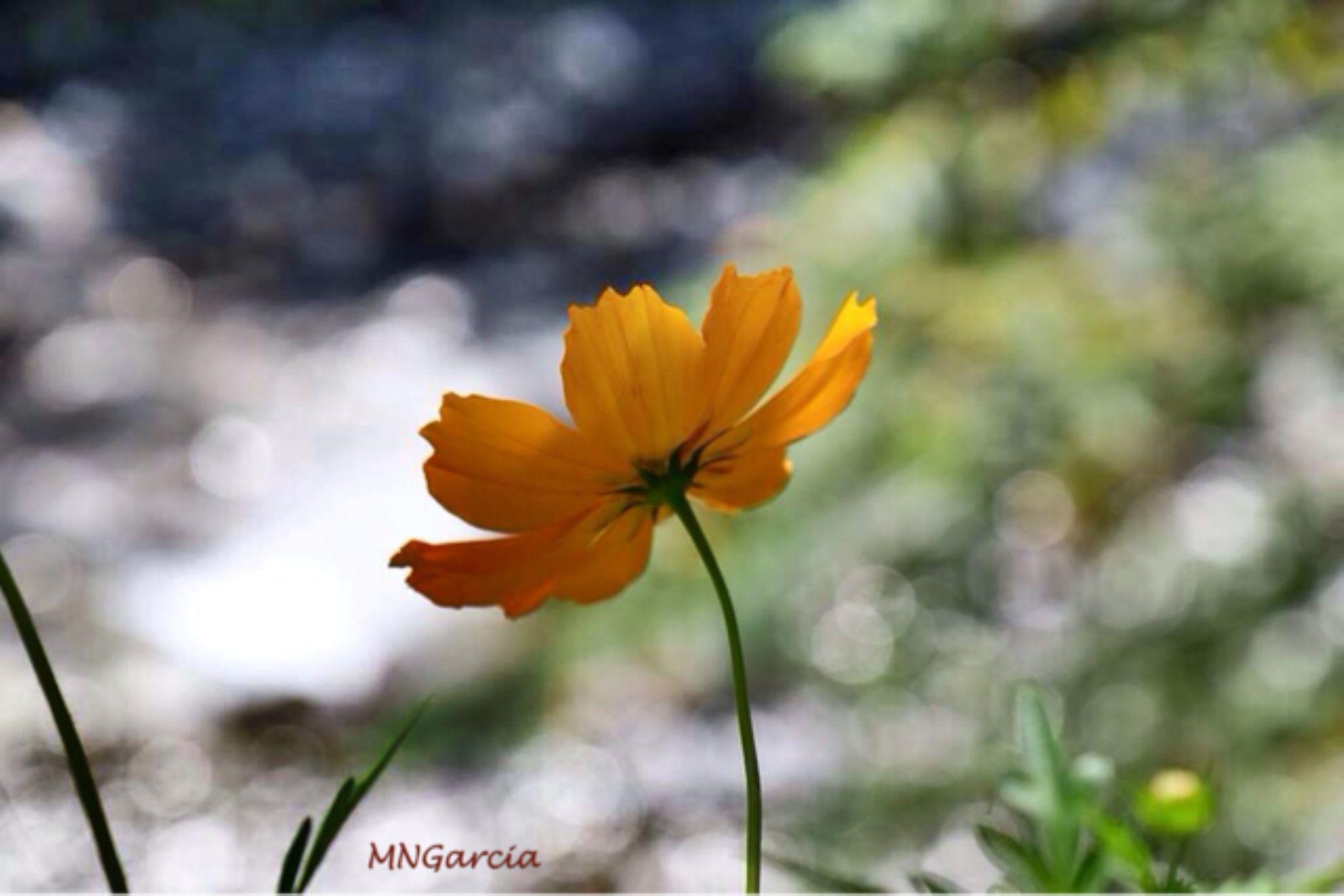 IMG_6349 by marina.nakashima
