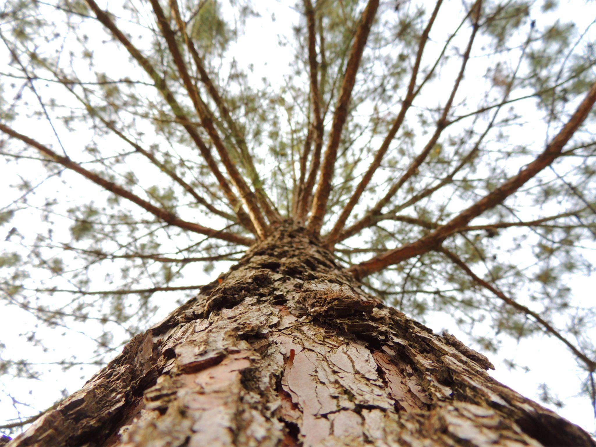 majestic tree by Just 4fun!