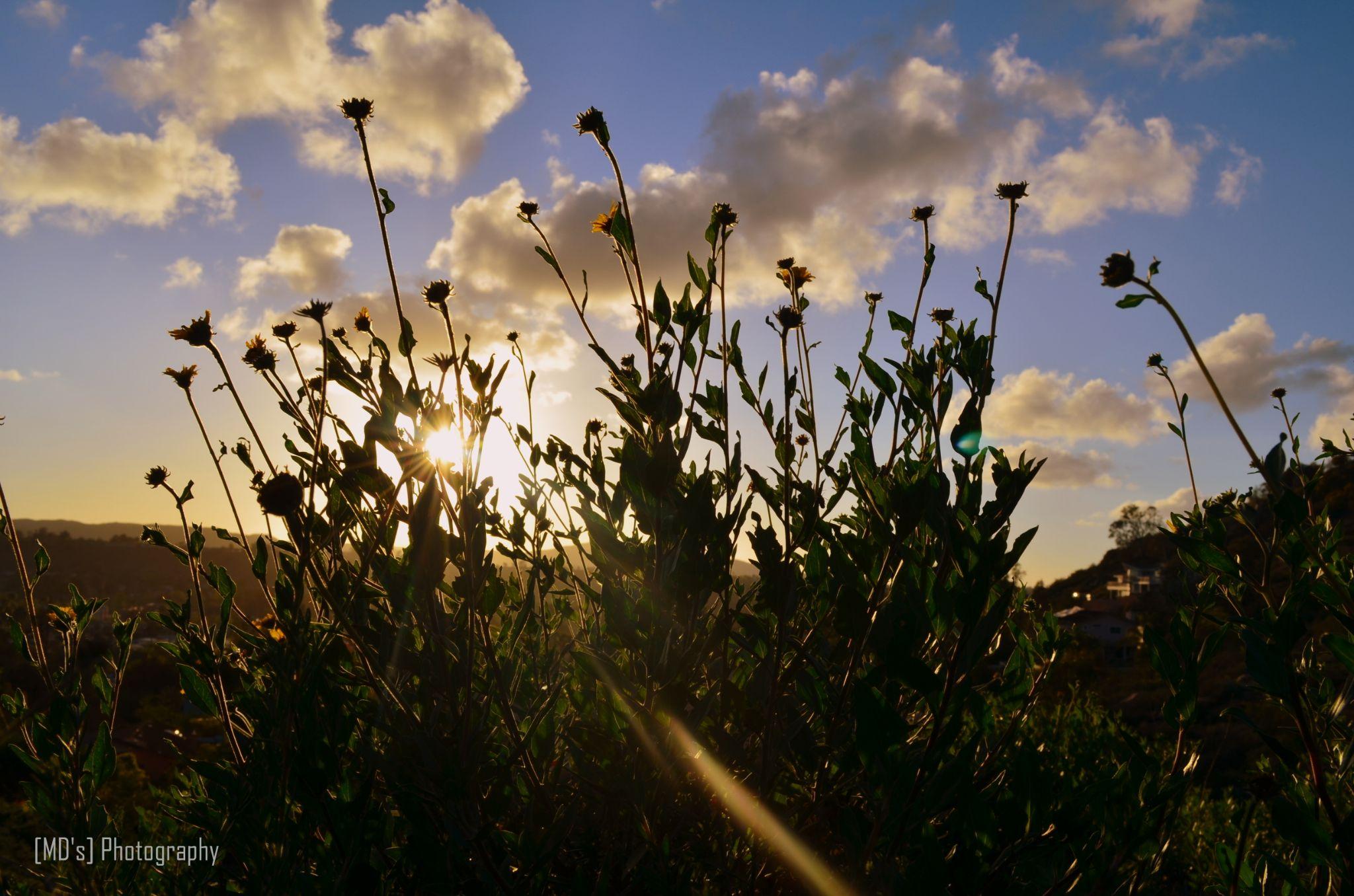 Flower Silhouette by Mohandoss Sampath