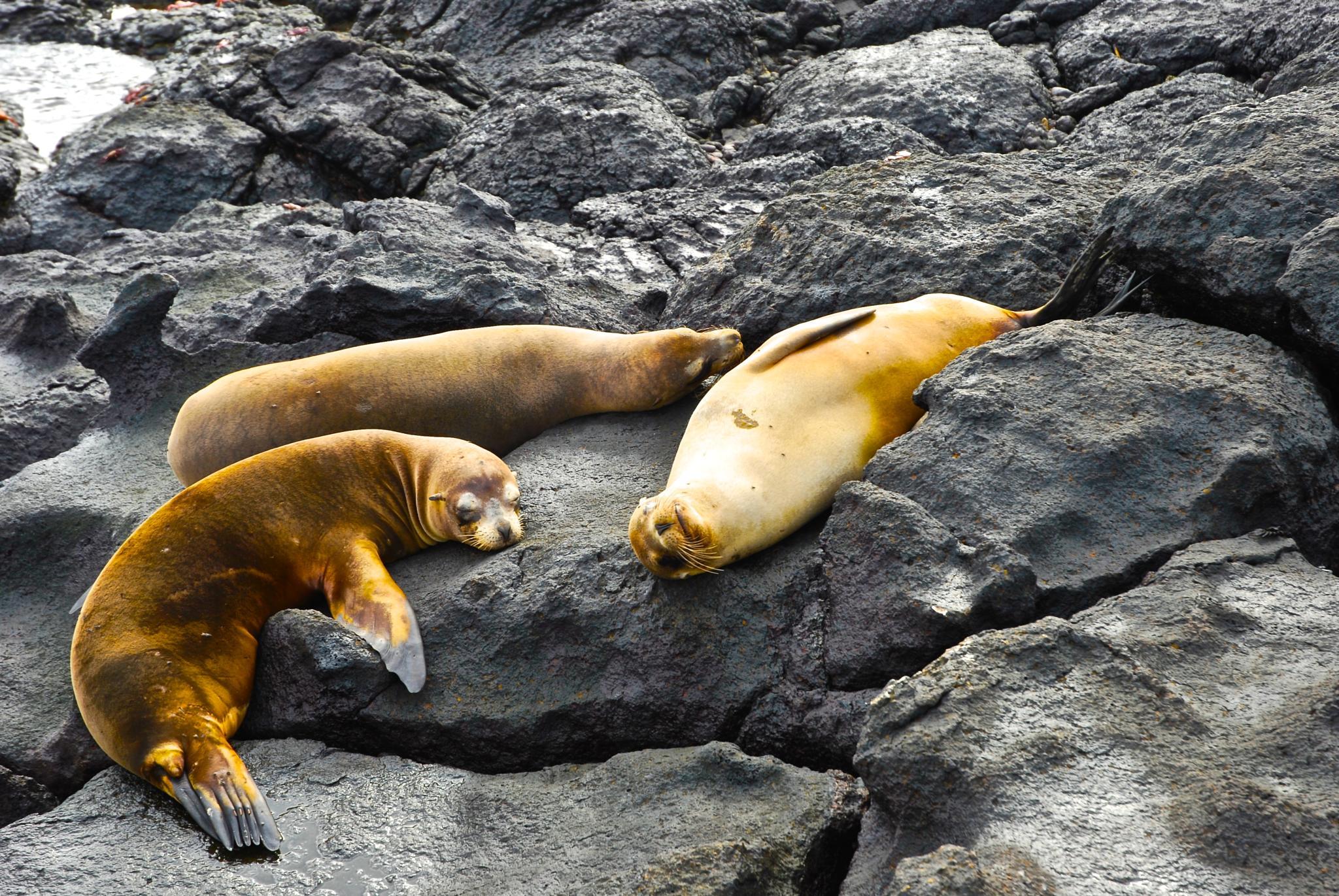 Galapagos - Relax by frankska63