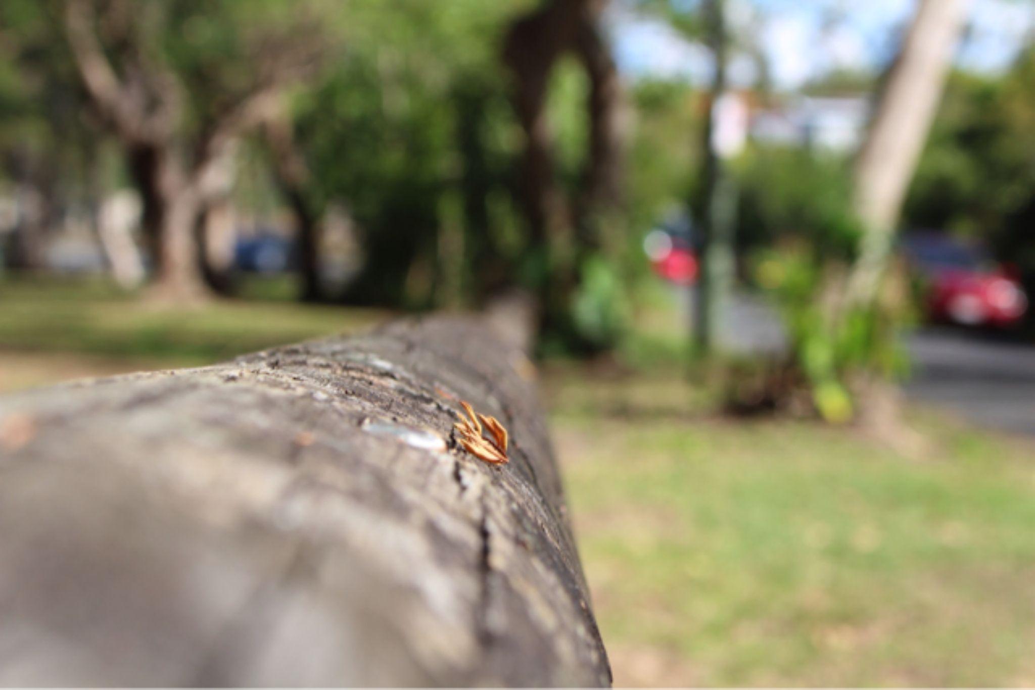IMG_3543 by Lola Jacaranda Photography