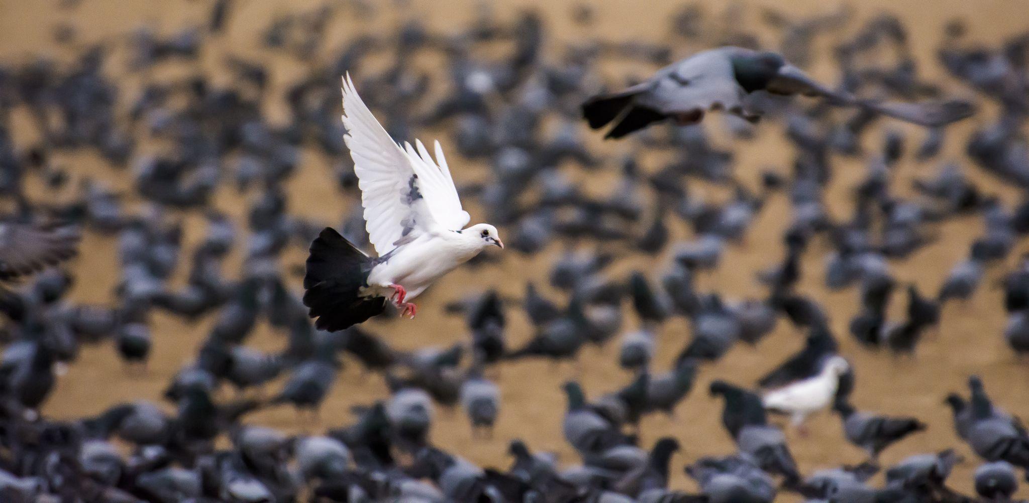 BIRD by sk.gupta.56