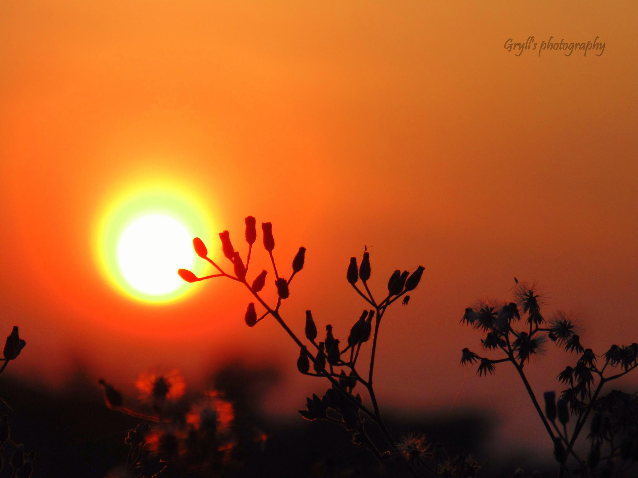 sunset by Girish Grylls