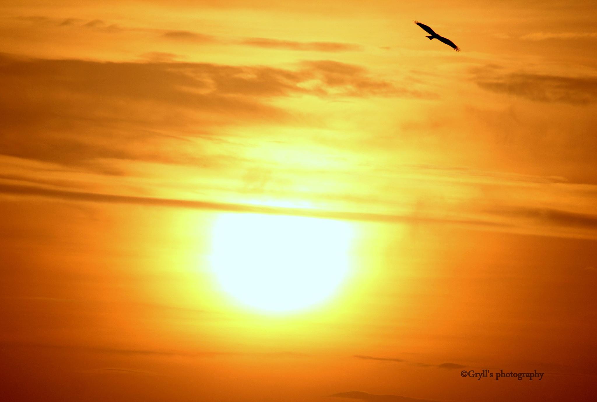 a better evening by Girish Grylls