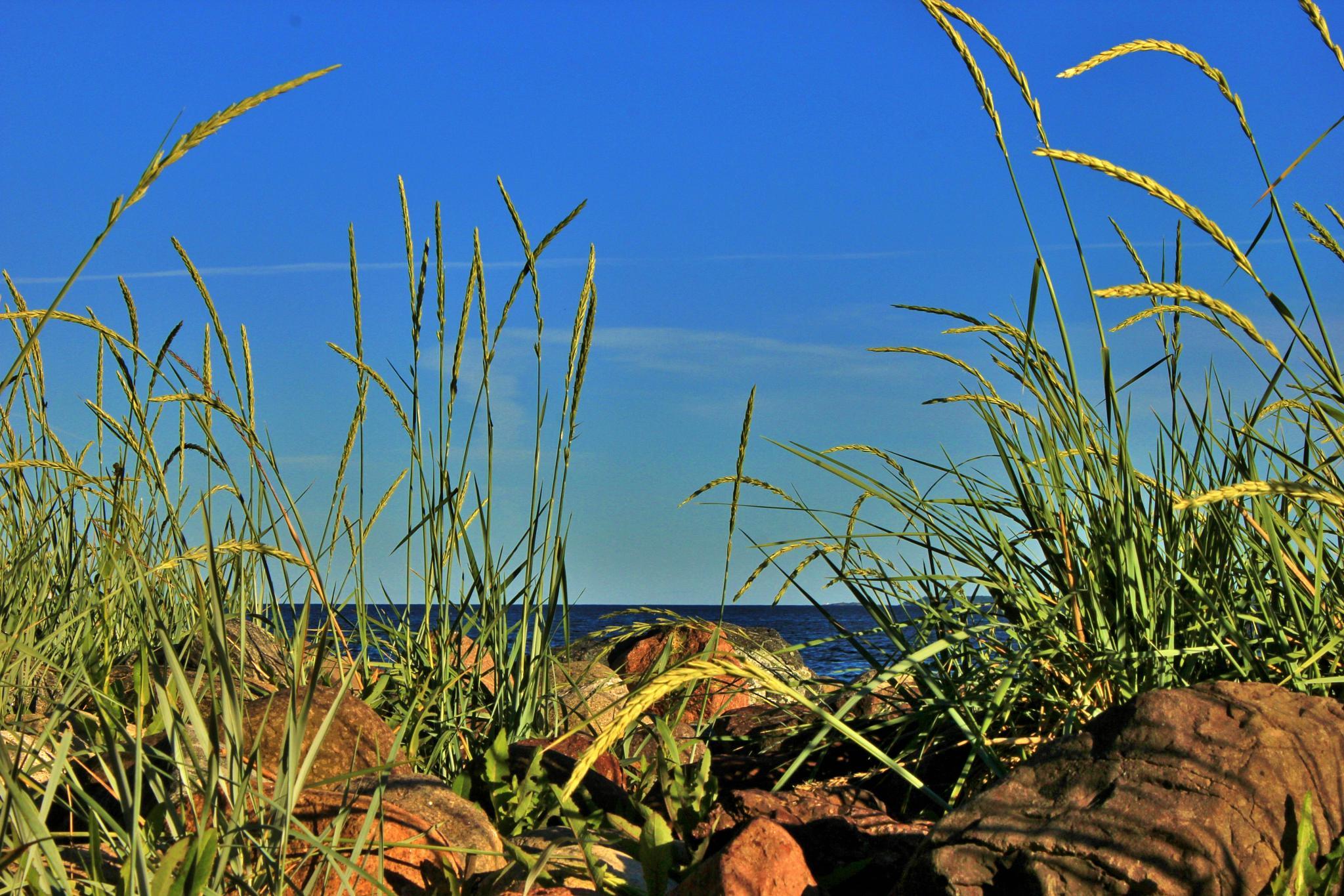 Summerdream by laila.sandbekk