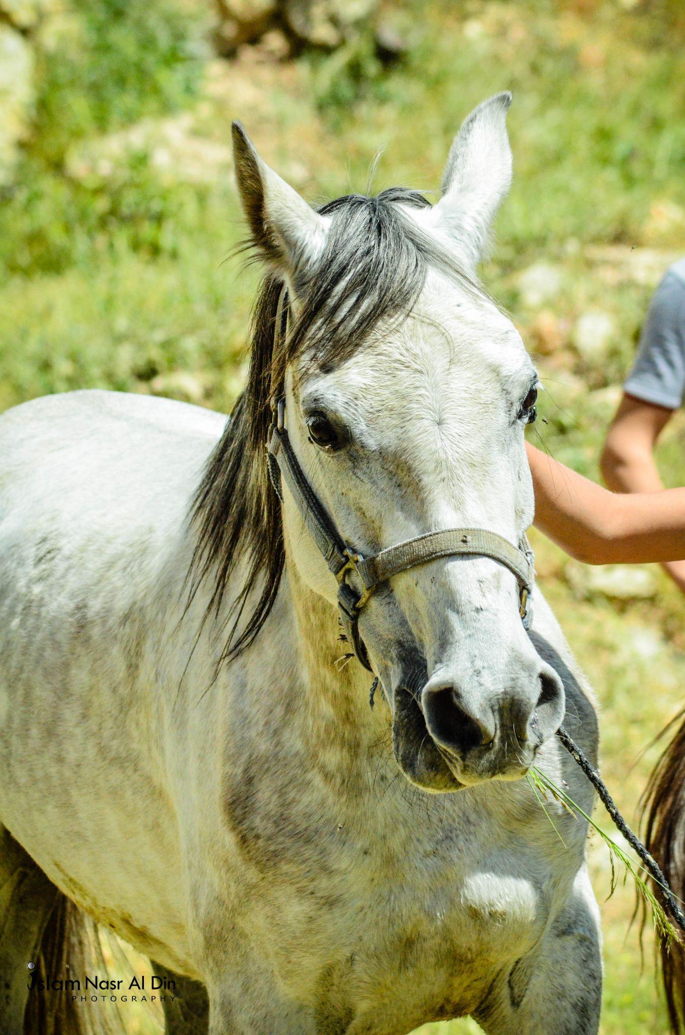 My horse by islam naser alden
