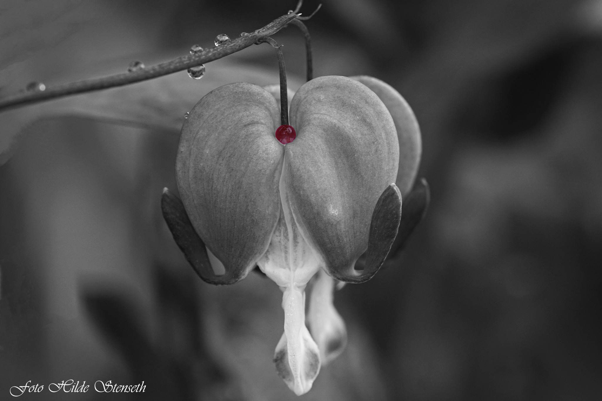 Selective Colour! by hilde.stenseth.7